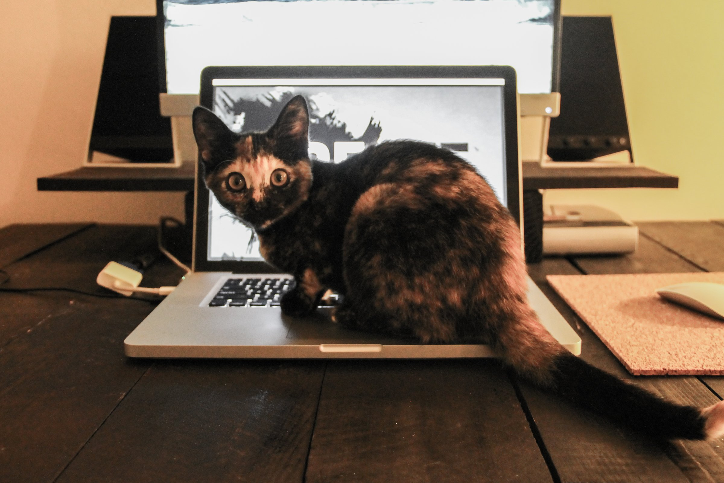 sitting on a laptop on a desk staring at you. DOWNLOAD THIS PHOTO