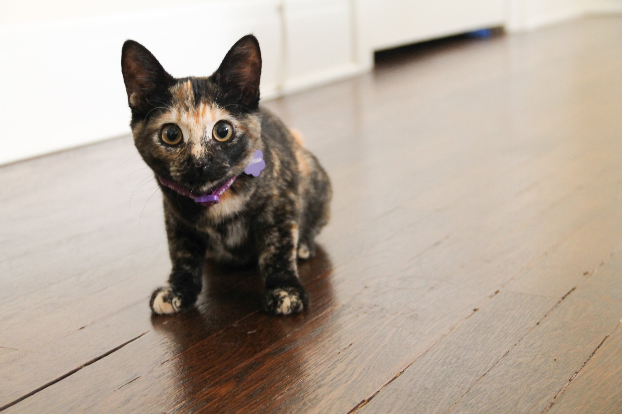 how to clean up cat pee on wood floor
