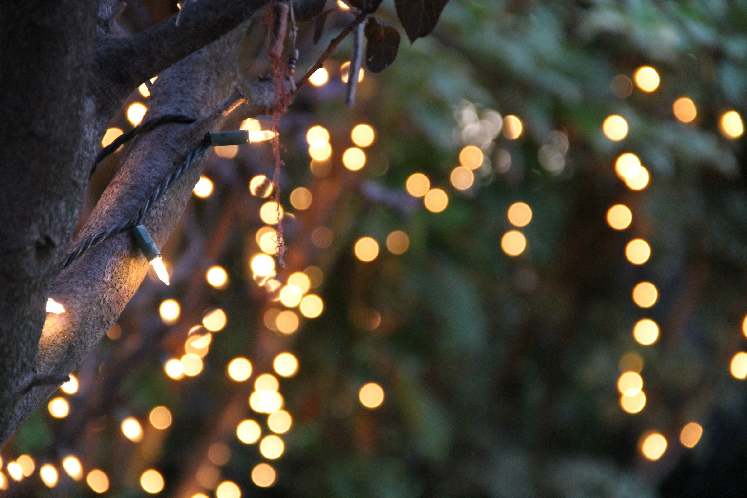 Free Photo of Bokeh of String Lights on Tree GOOD STOCK PHOTOS