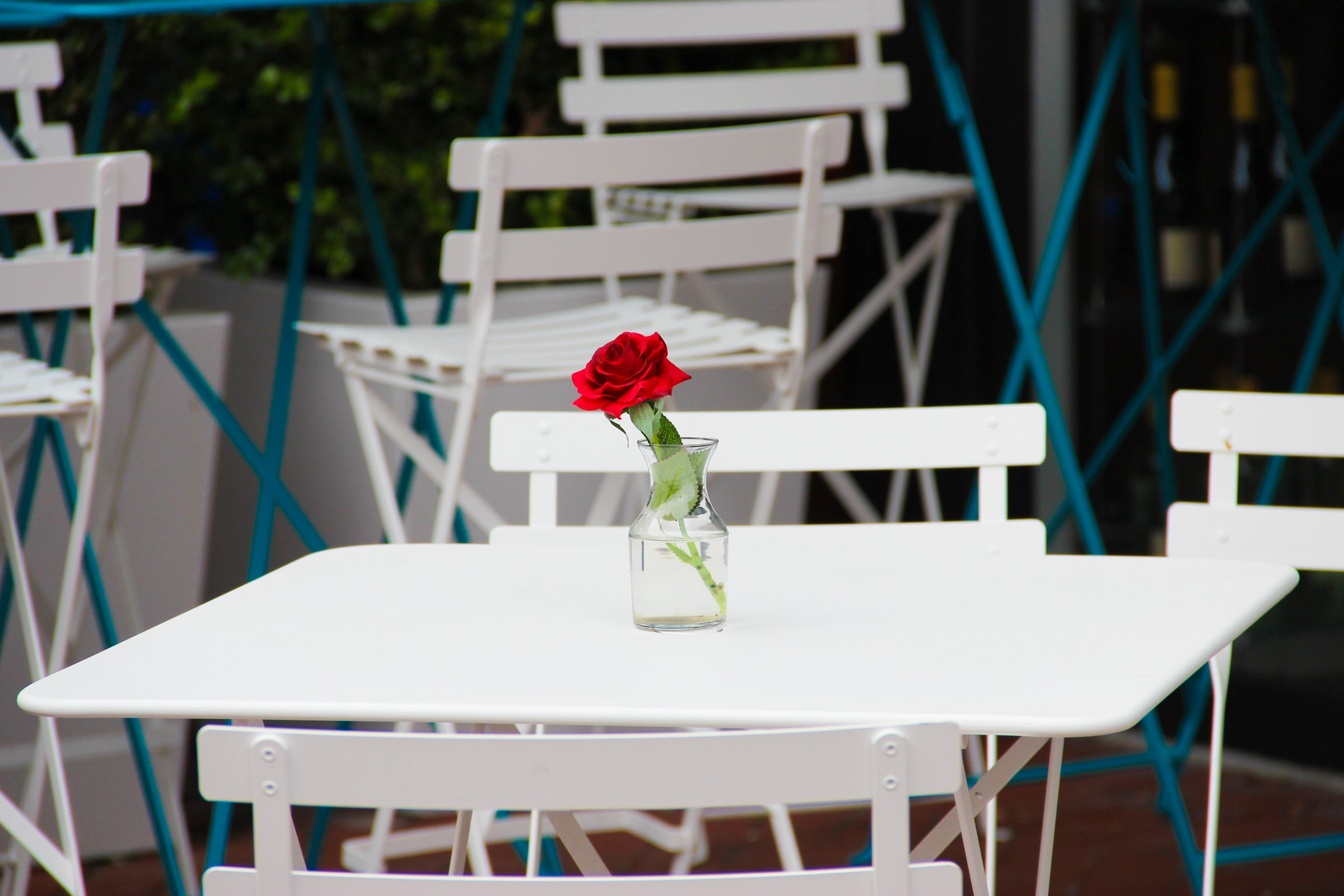 Red Rose in Vase on White Table