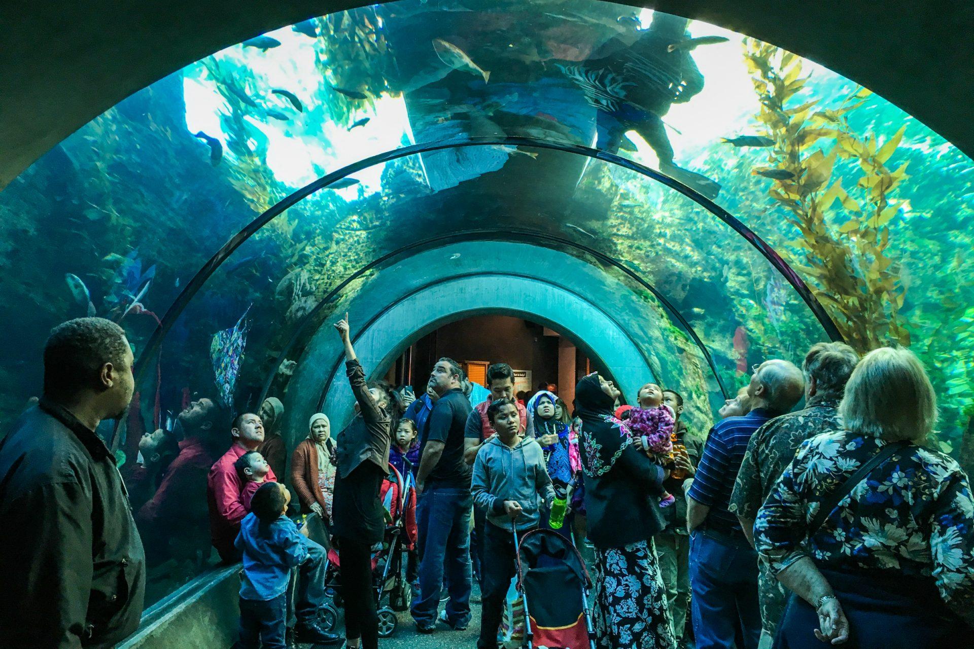 People in Aquarium Tunnel