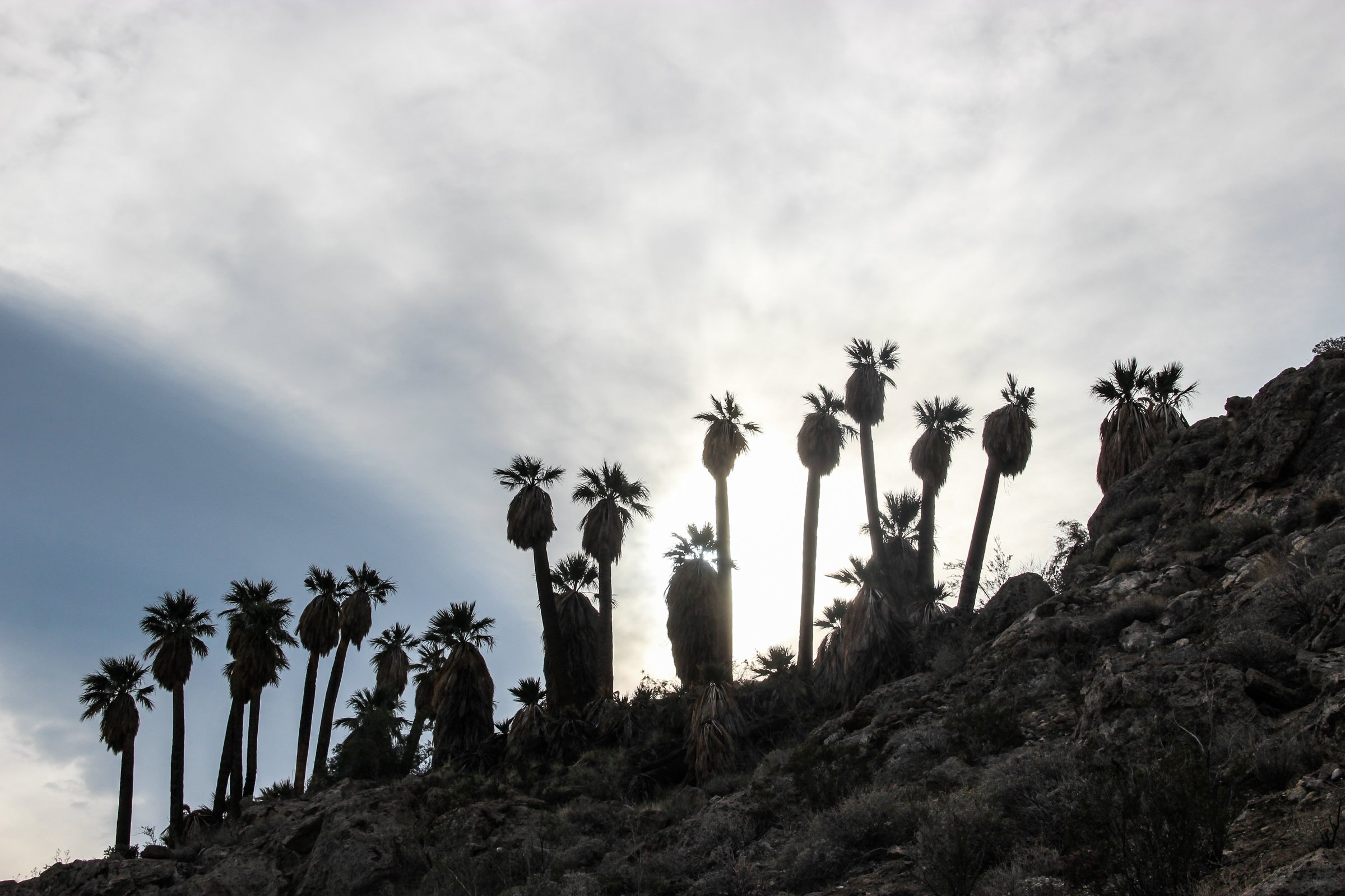 Palm Trees on Rocky Hill
