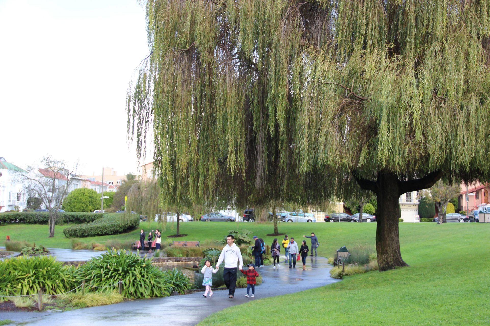 People Walk Through Park Under Willow Tree