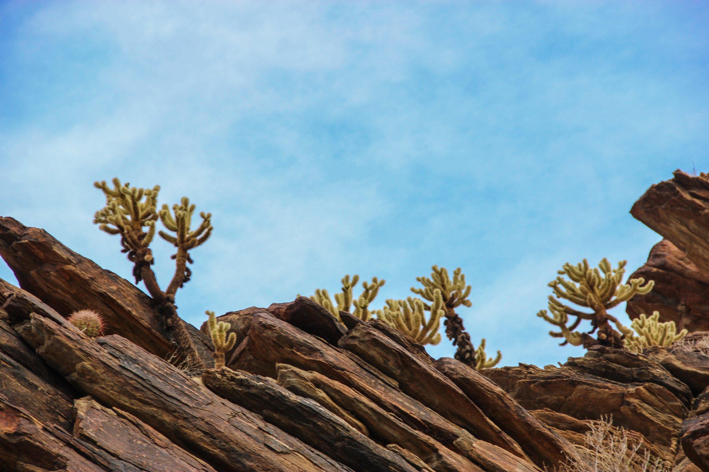 Cactus on Jagged Rocks