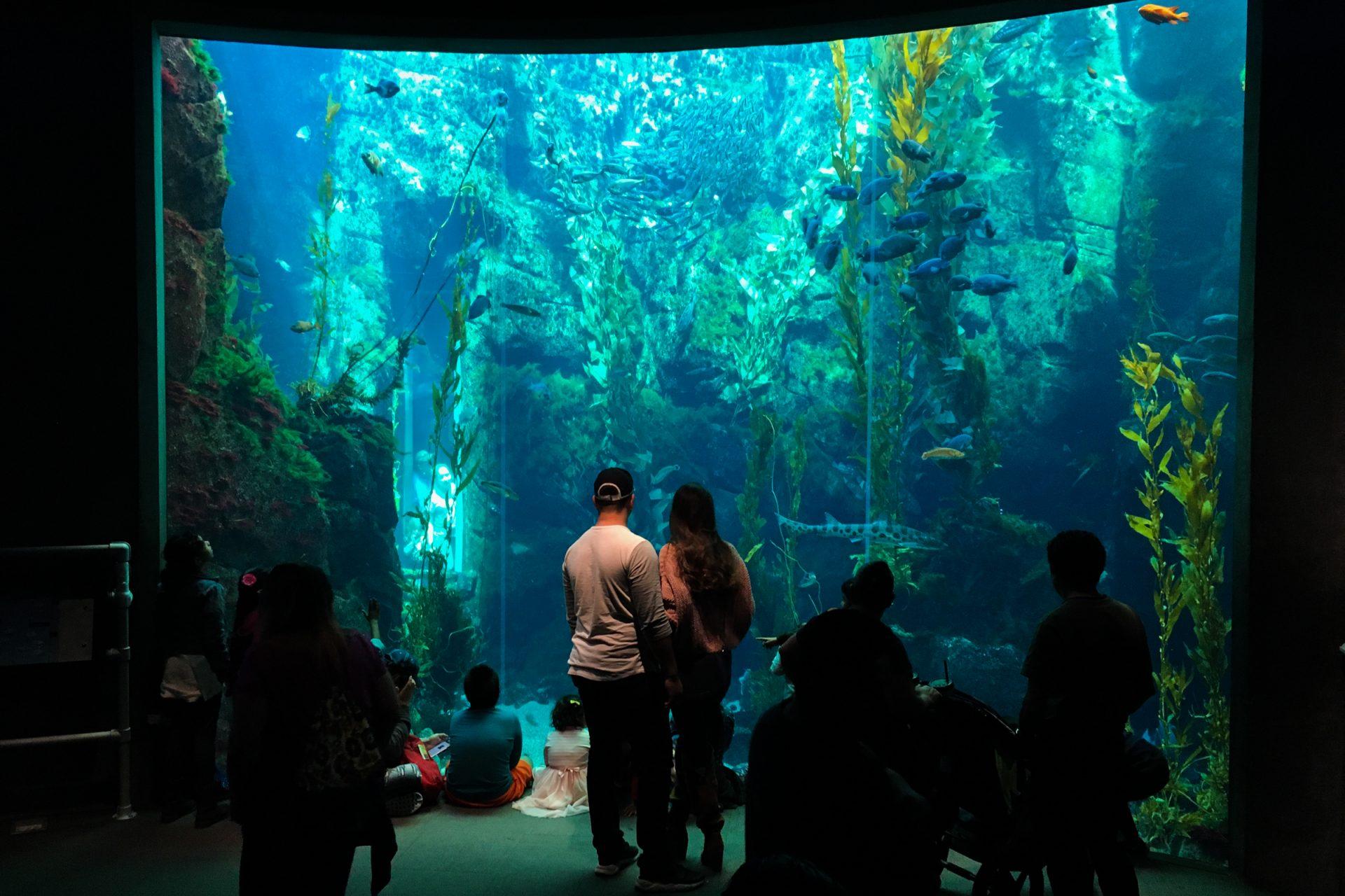 Families in Front of Glass Aquarium