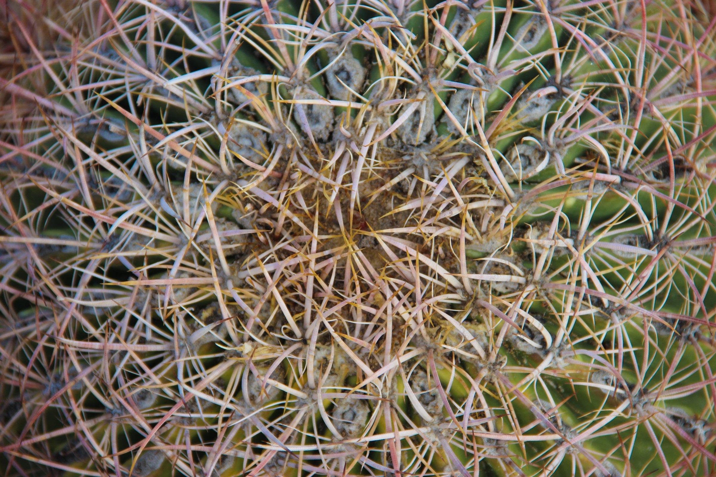 Close Up of Cactus Thorns