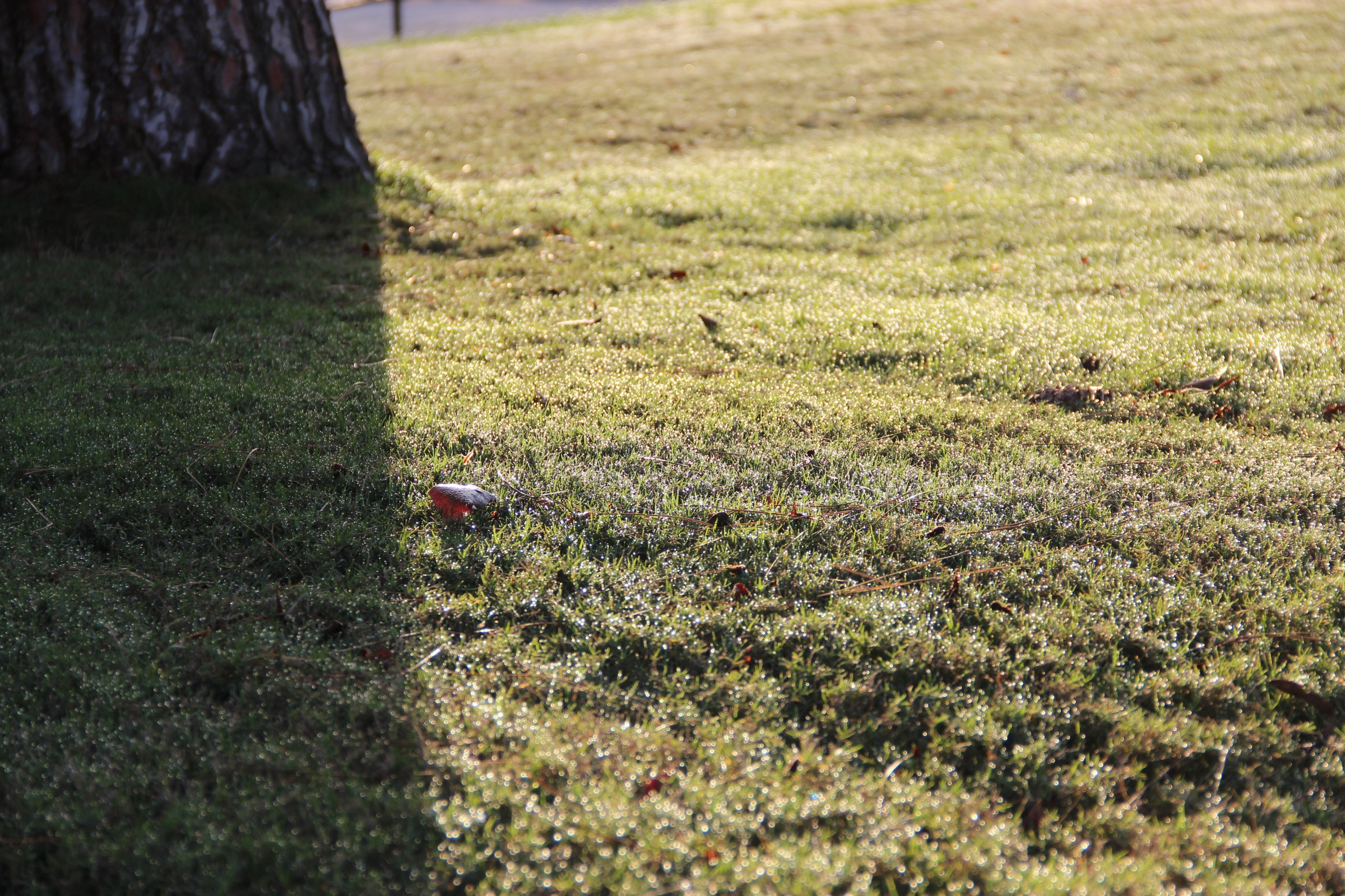 Grass in Sunlight & Shadow