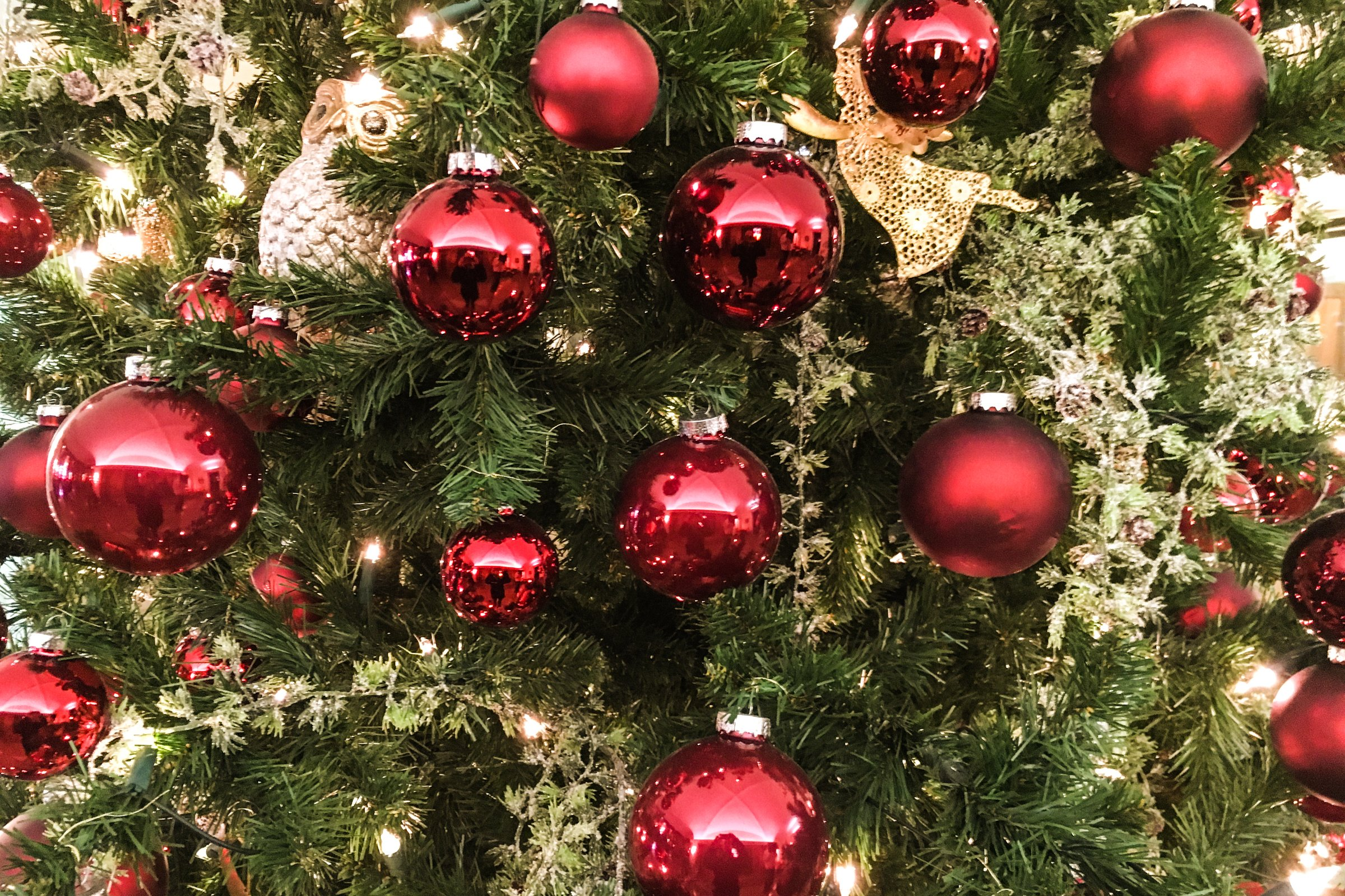Christmas Tree Balls.Free Stock Photo Of Closeup Of Red Ball Ornaments On