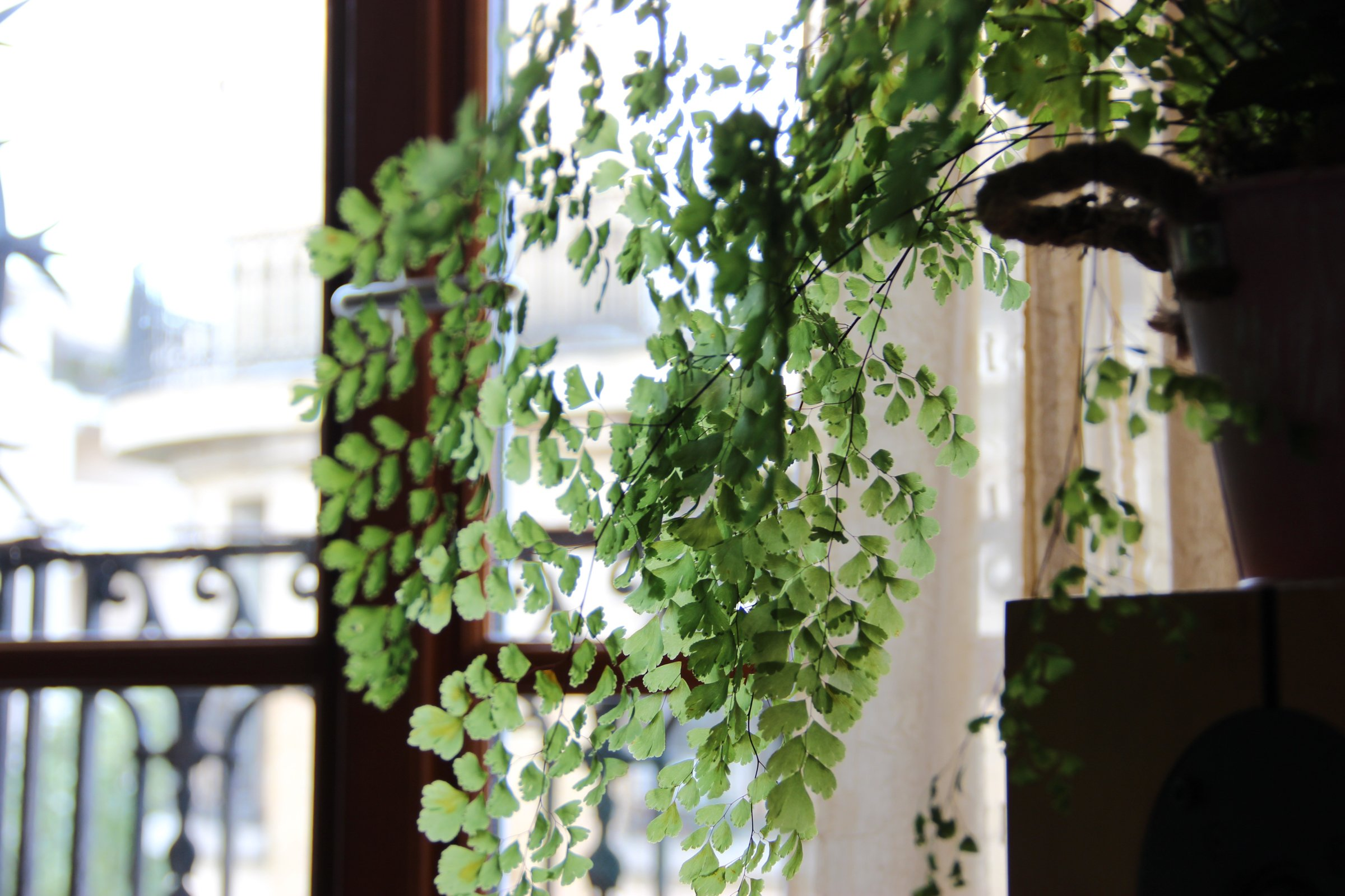 House Plant by Window