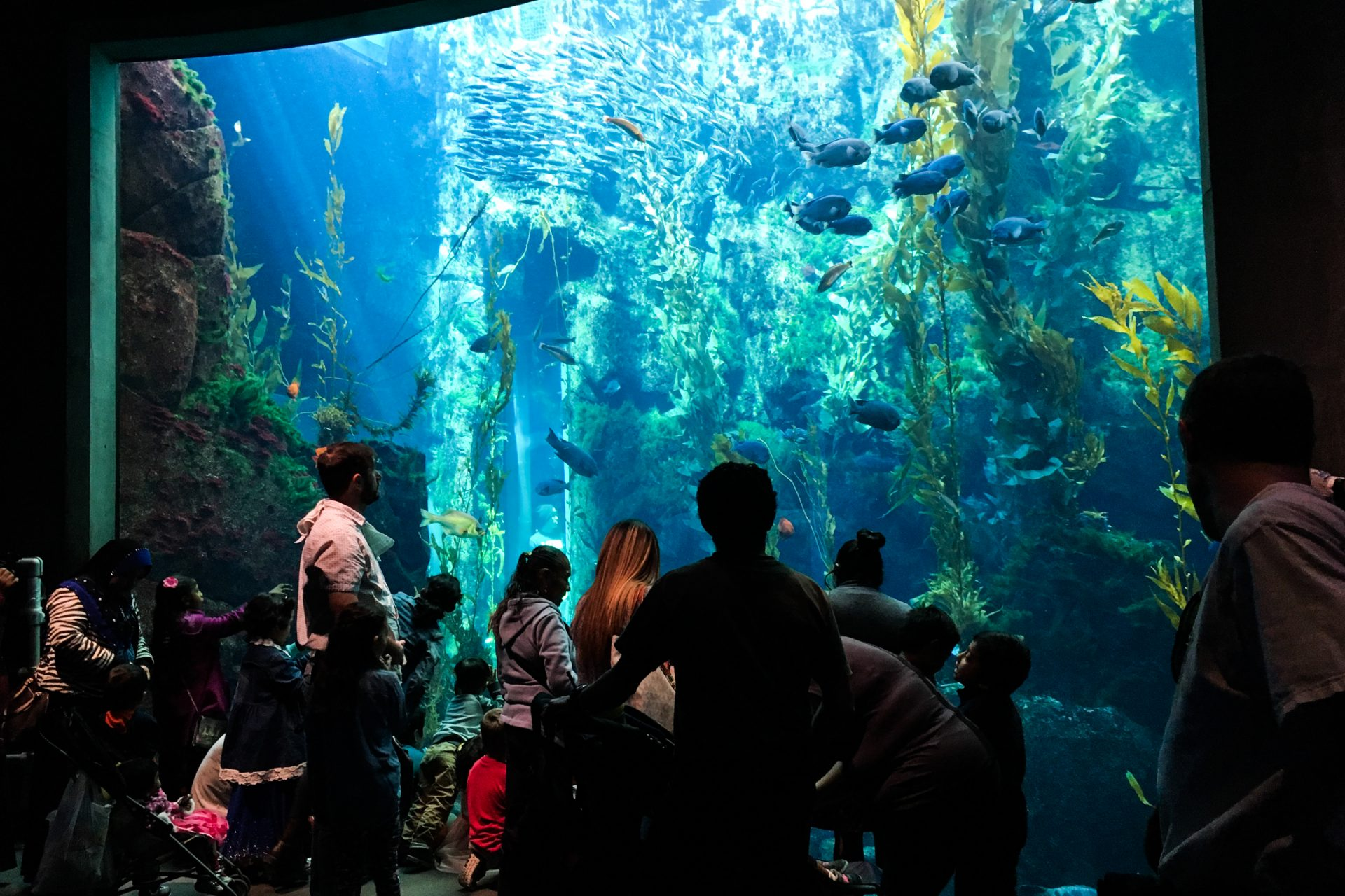 People Looking at Fish in Aquarium