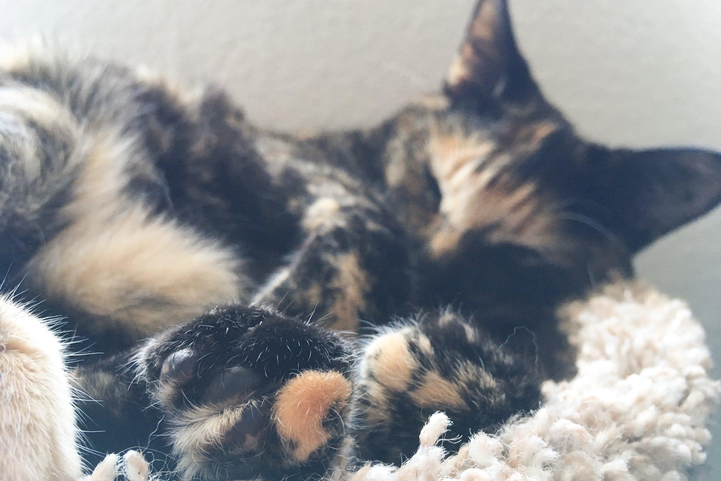 Cat Sleeping on Side