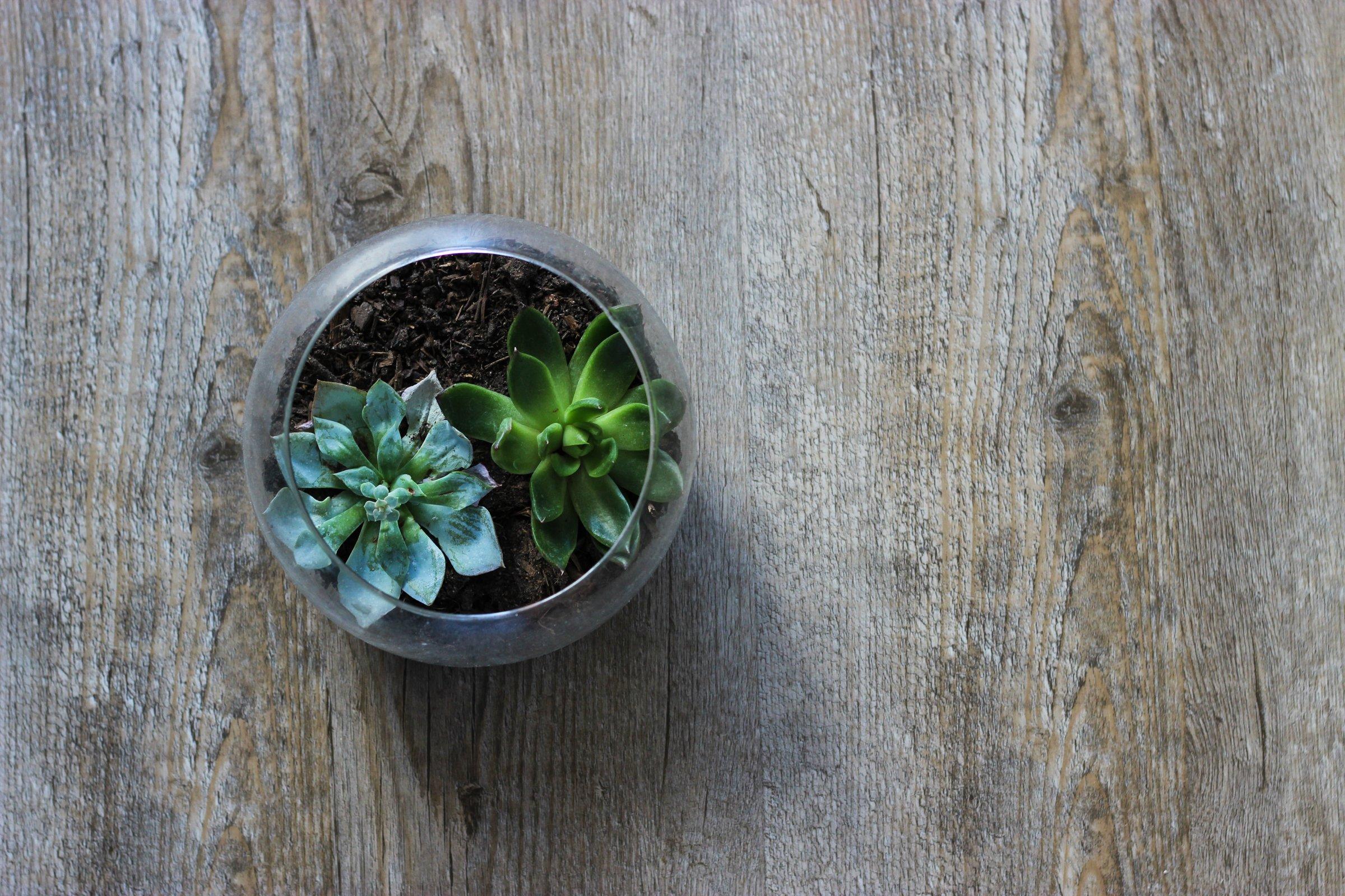 Succulent Jar on Wood Table