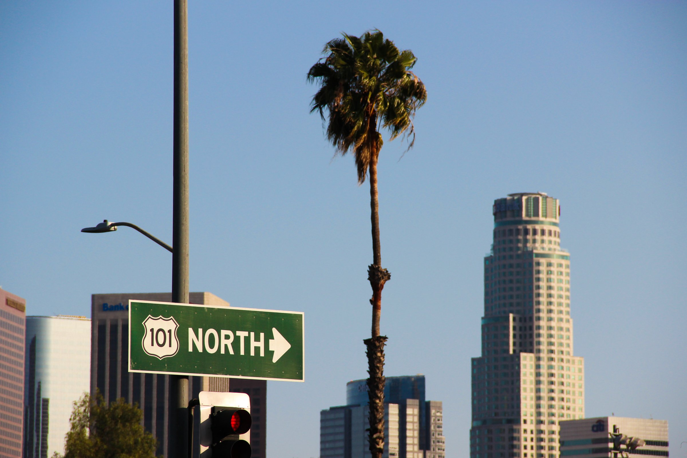 Palm Tree Among Buildings And Street Signs