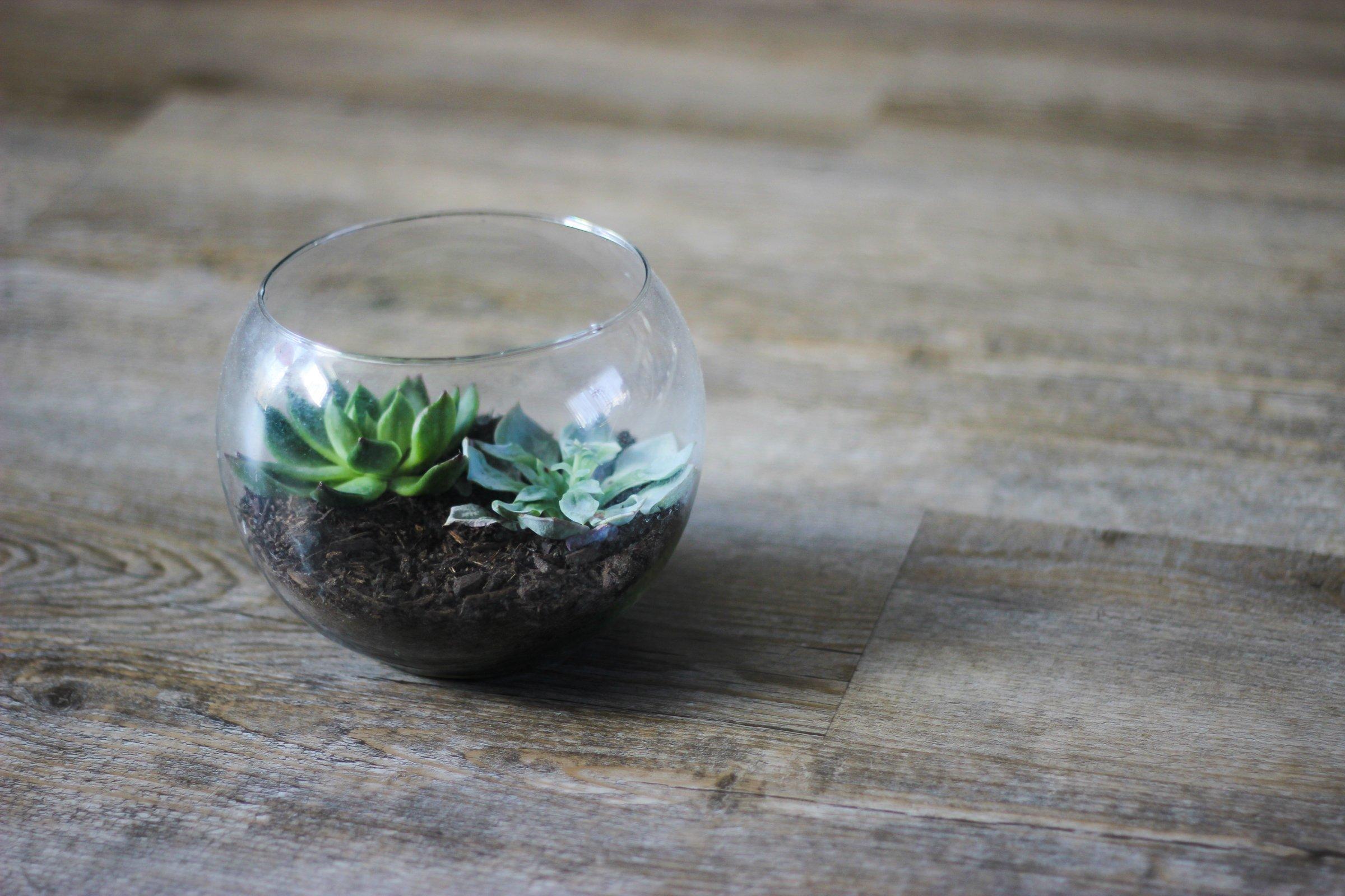 Free Stock Photo Of Succulent Terrarium On Table