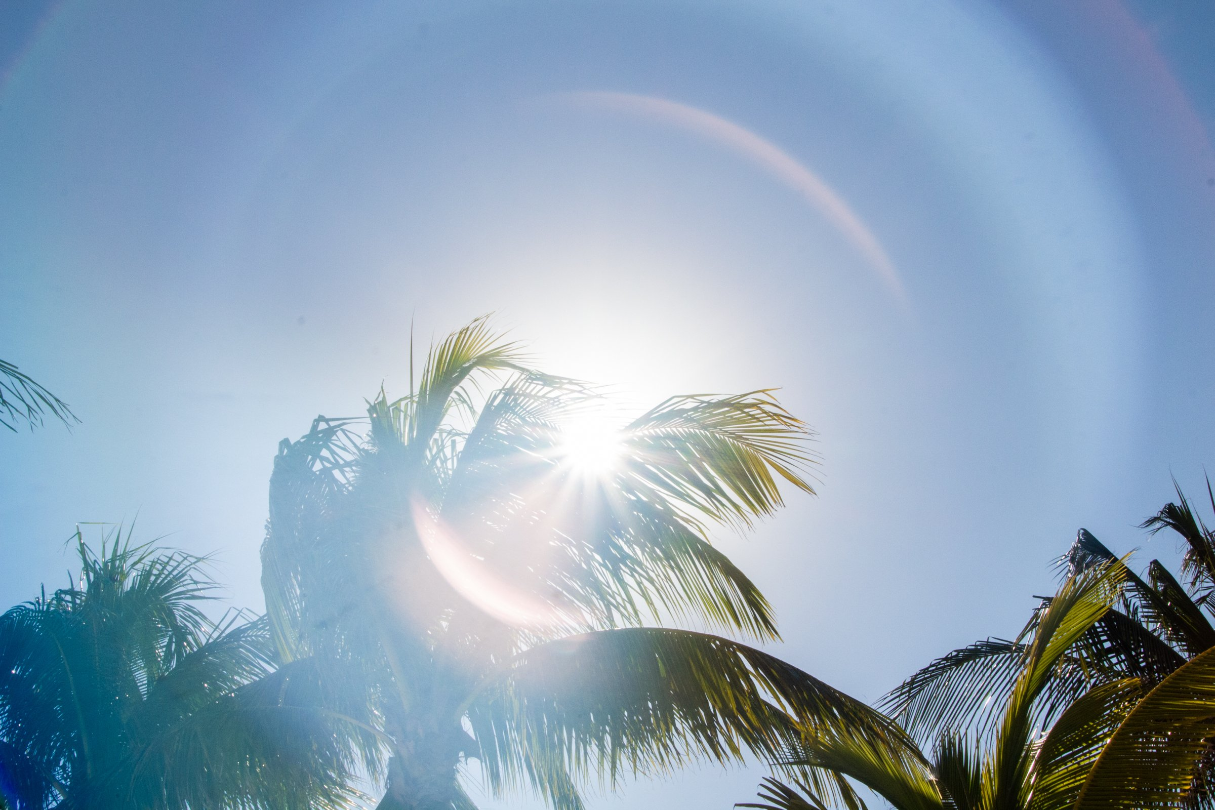 Palm Trees In Bright Sun