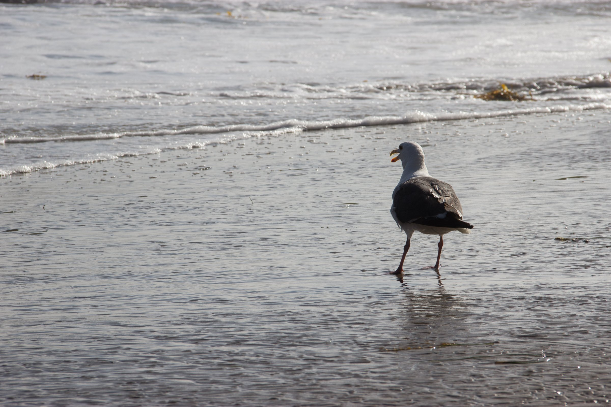 Seagull Standing On Wet Sandy Shore