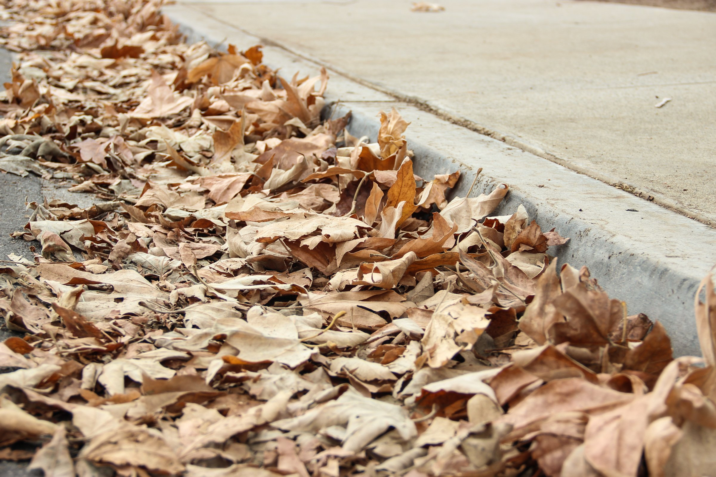 Dead Dry Autumn Leaves Near Sidewalk Pavement