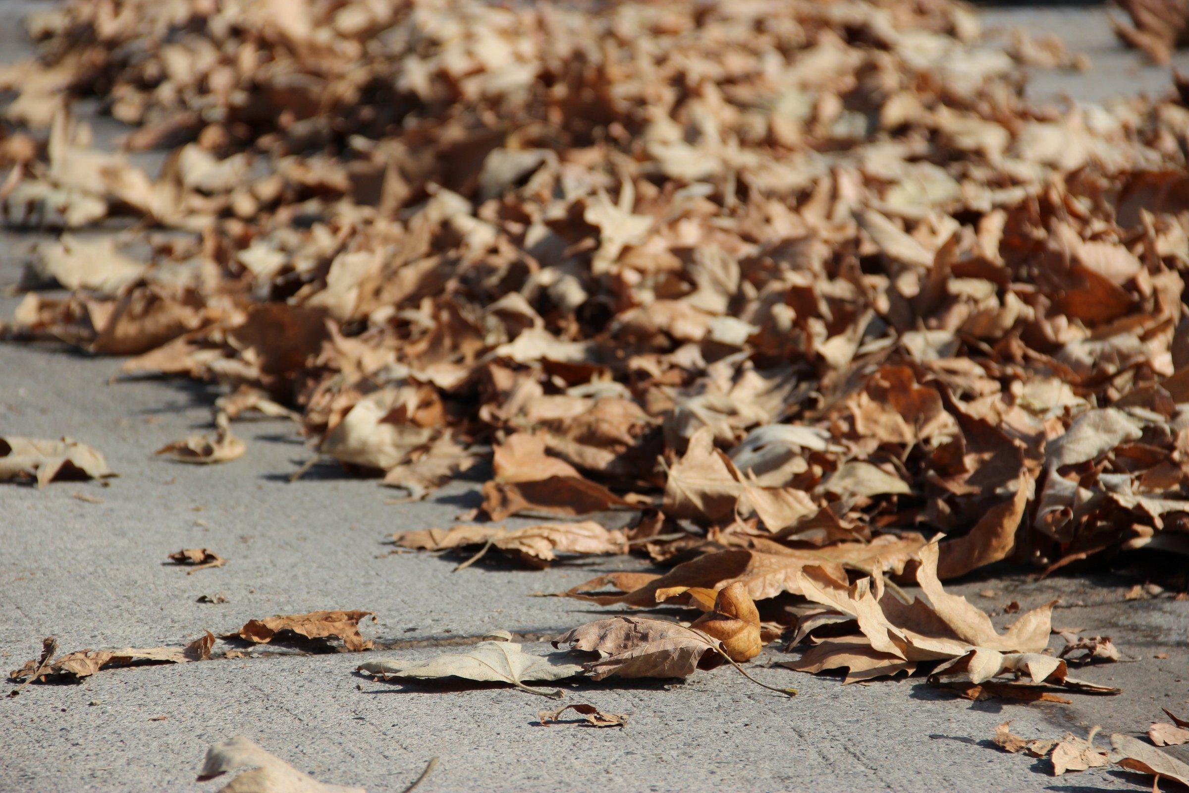 Fallen Dead Leaves On Concrete