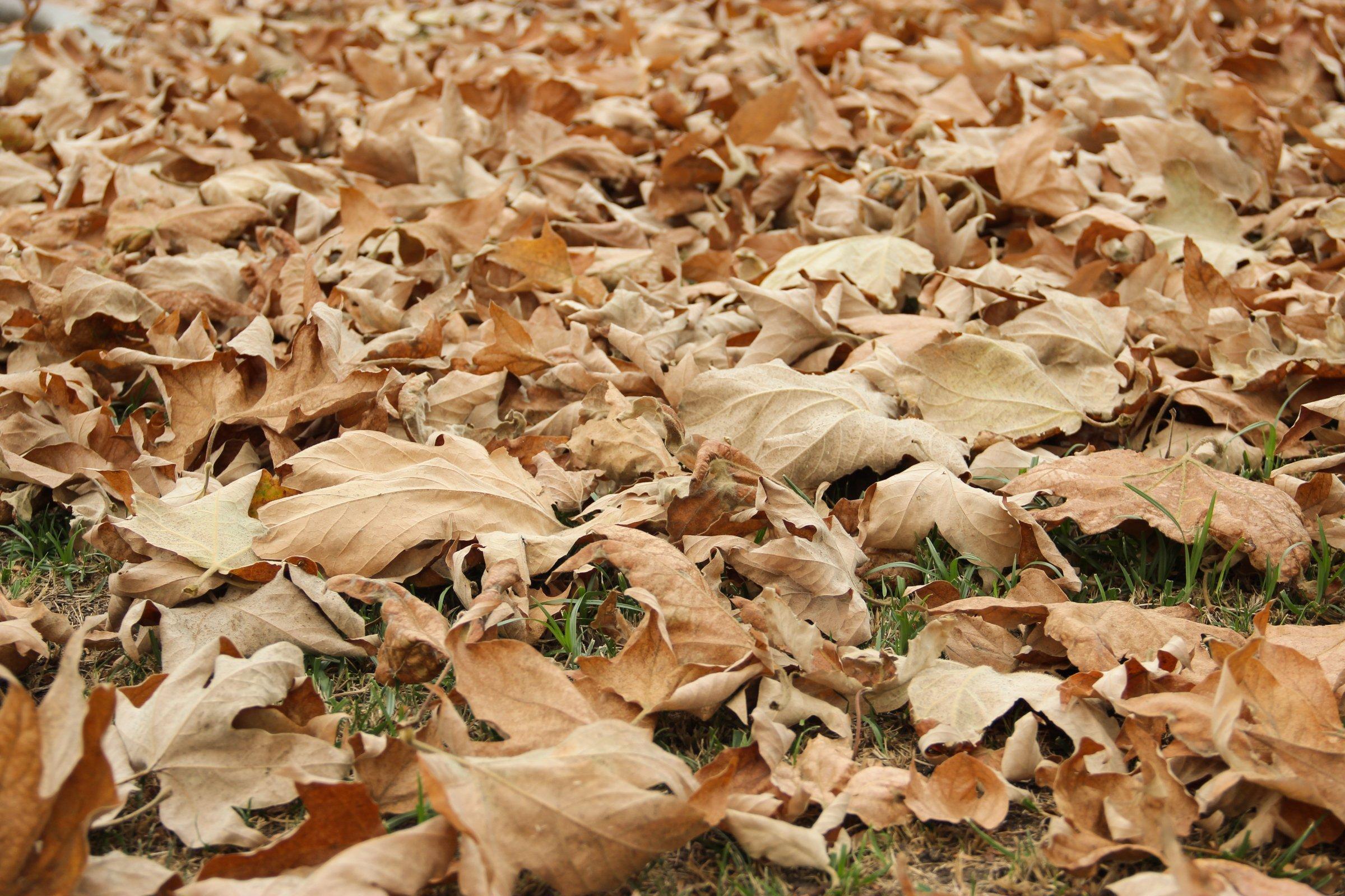 Fallen Dry Leaves On Grass