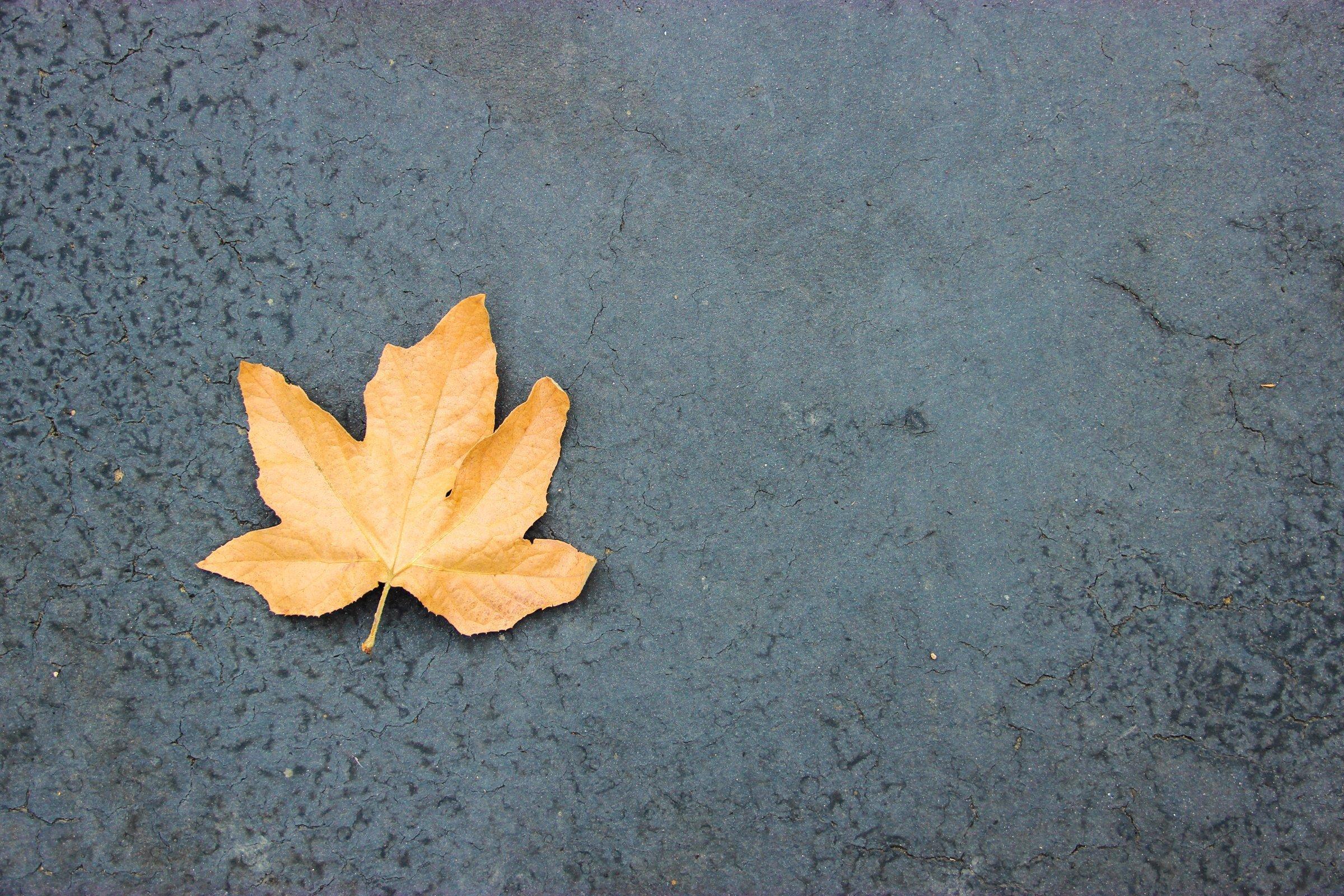 Single Autumn Maple Leaf On Asphalt