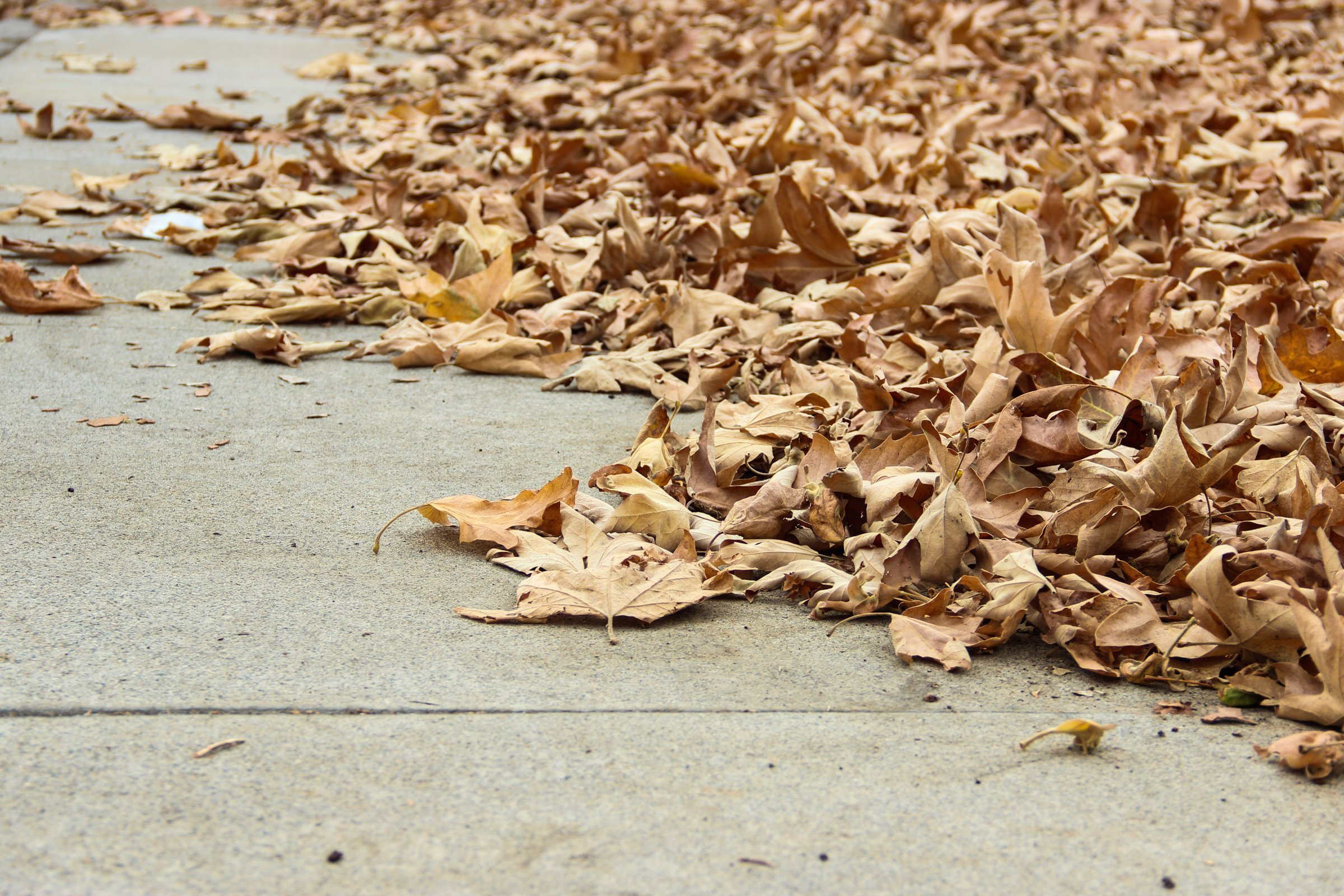 Pile Of Dry Autumn Leaves On Concrete
