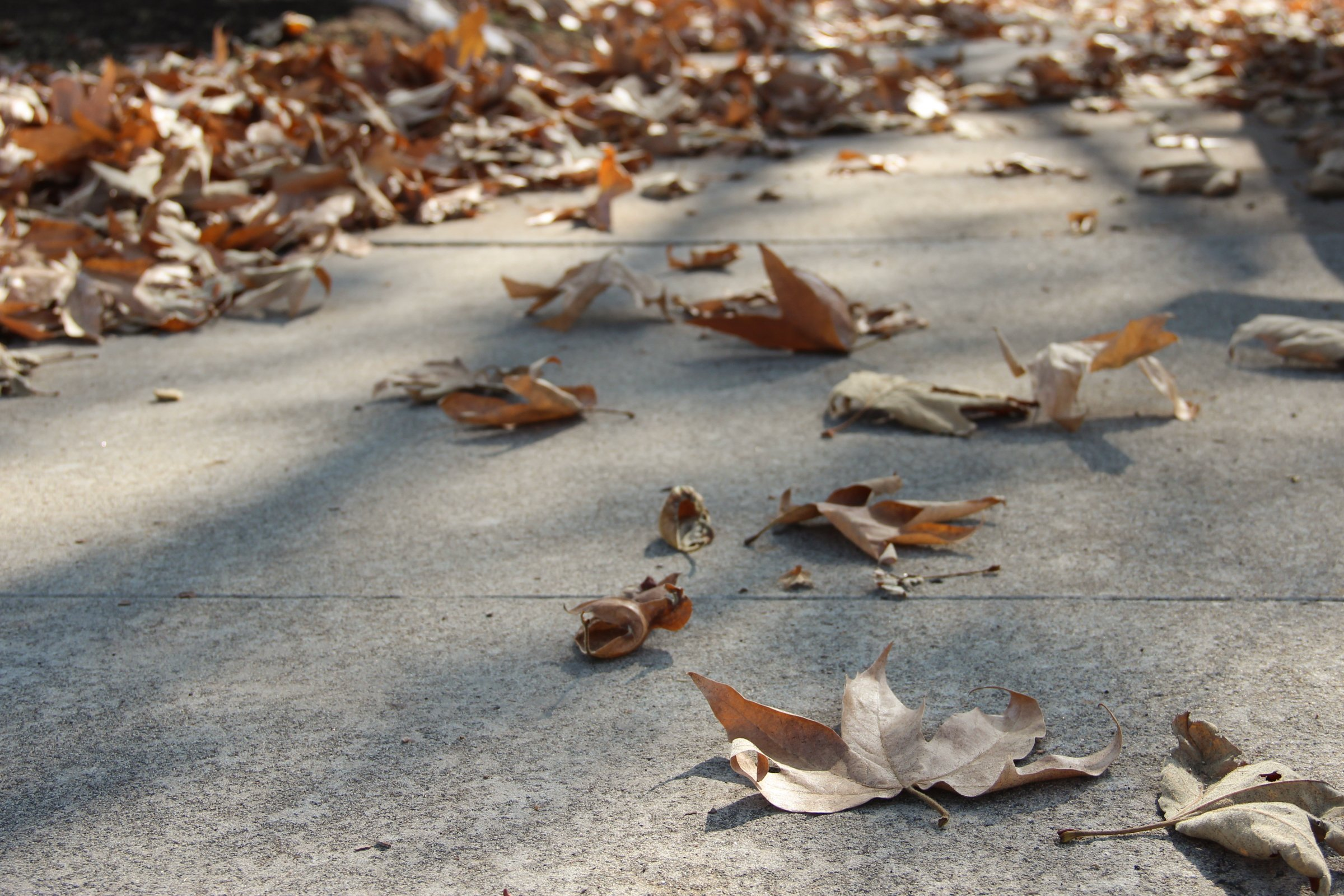 Scattered Dry Leaves On Concrete Sidewalk