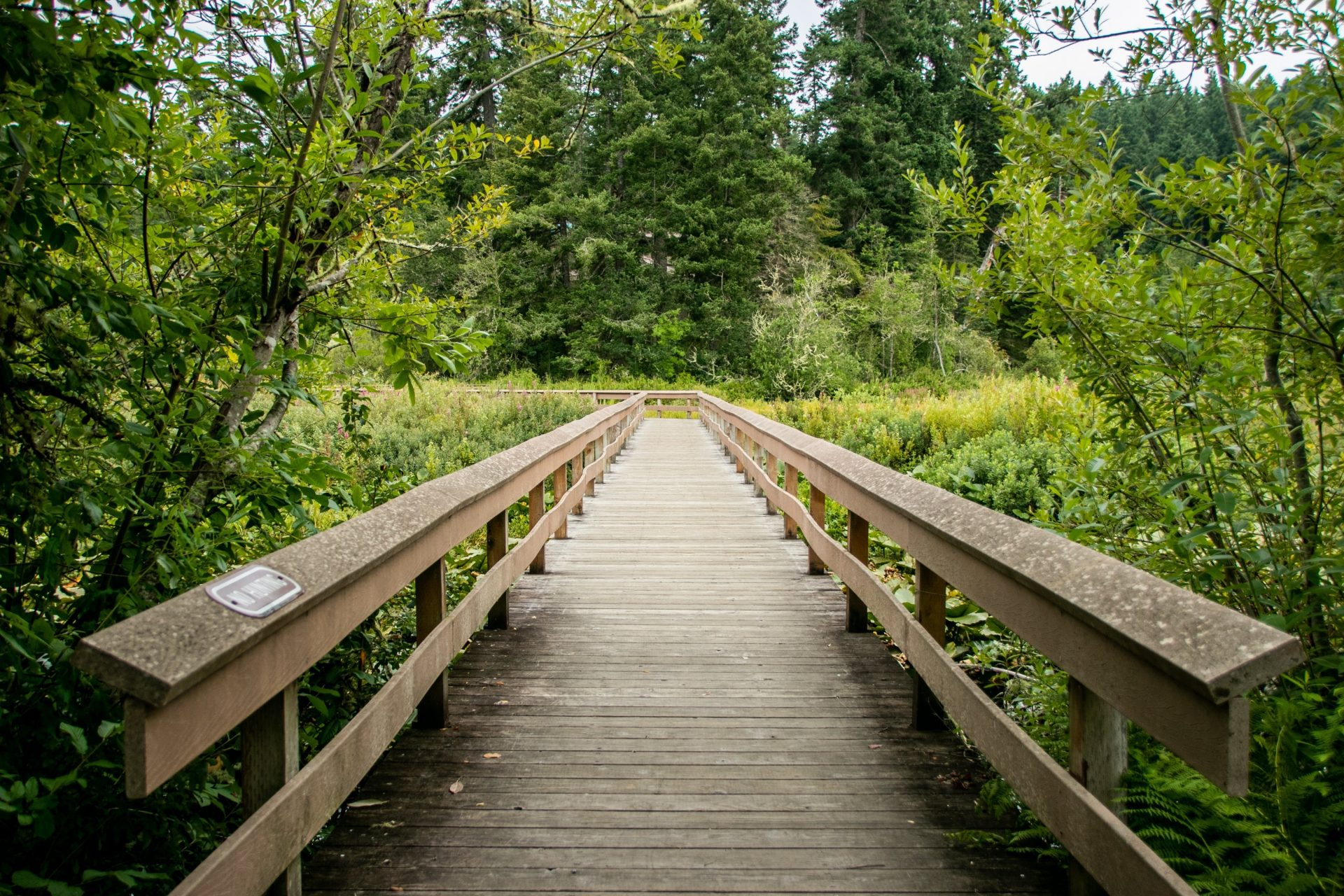 Wooden Boardwalk With Railings Between Plants And Trees