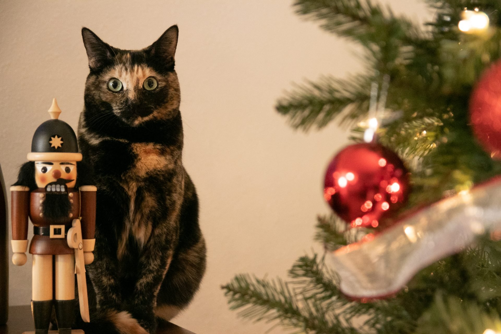 Cat Sitting Besides Nutcracker Doll Next To Holiday Decorations