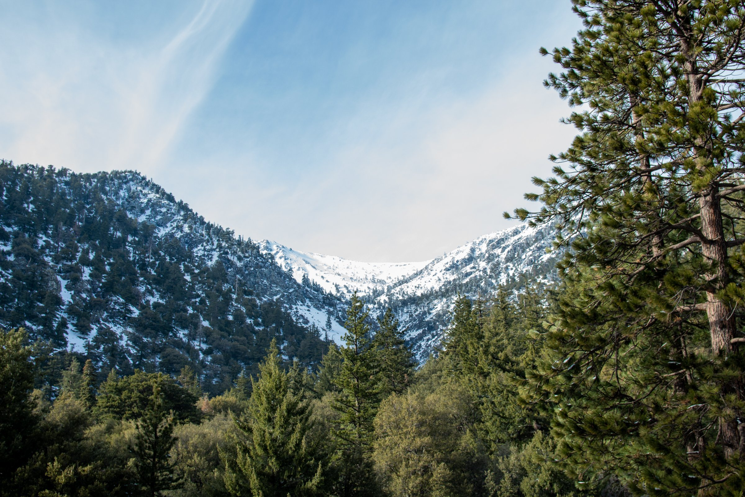 Ice Covered Mount Baldy Behind Forest Trees