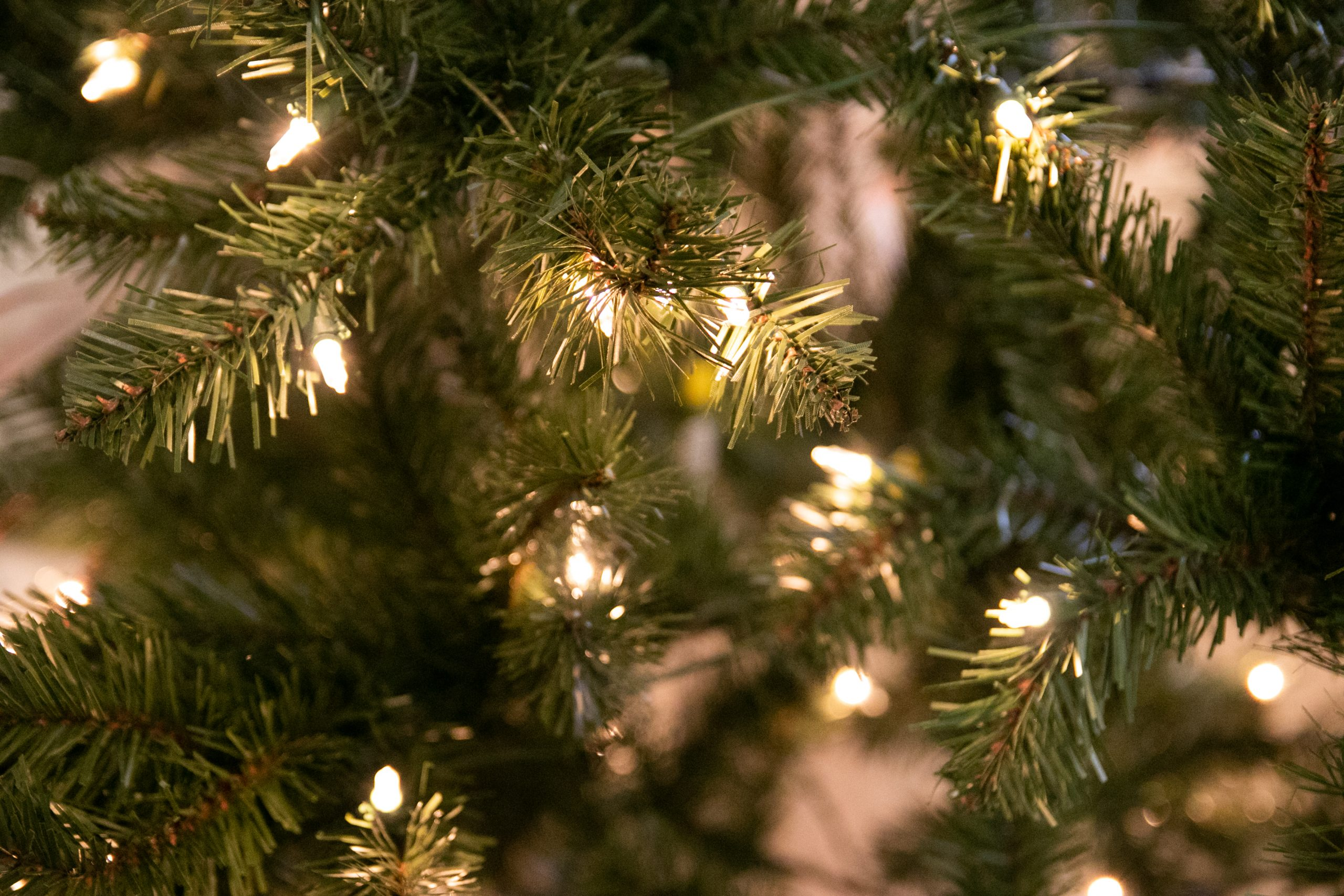 Lit Fairy Lights On Tree
