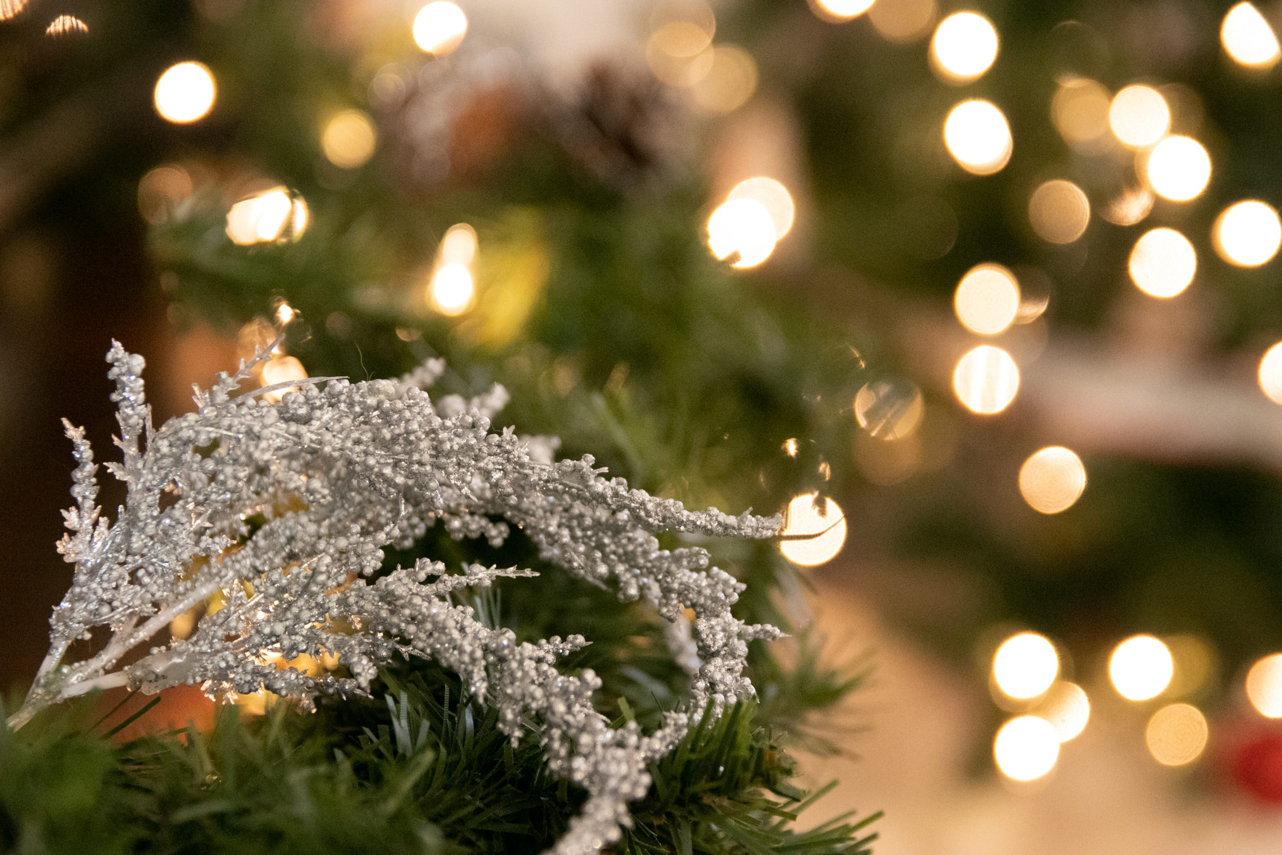 Free Stock Photo of Silver Branch Decoration On Tree