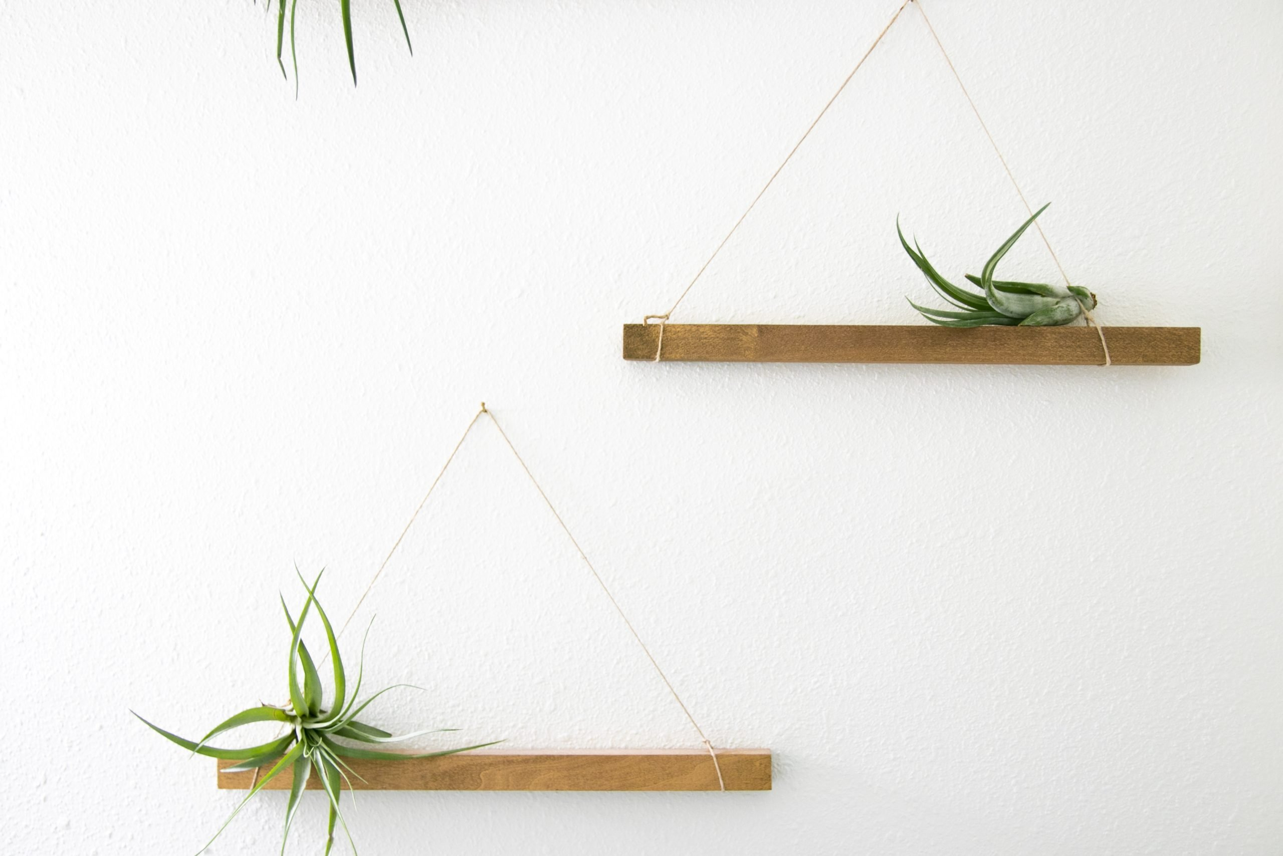 Free Stock Photo of Unpotted Succulent Plants On Hanging Wooden Shelves
