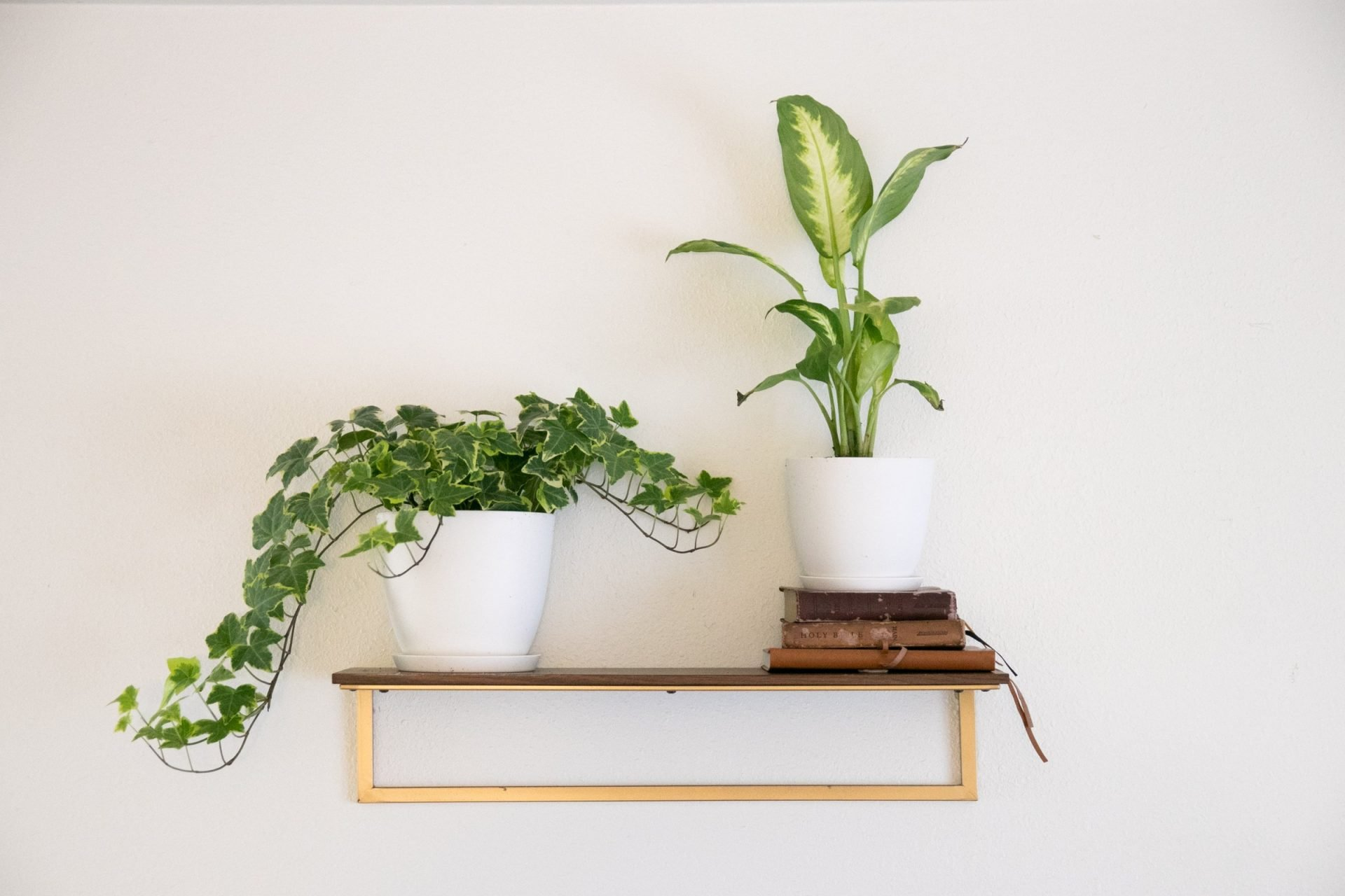 Plants And Stacked Books On Shelf