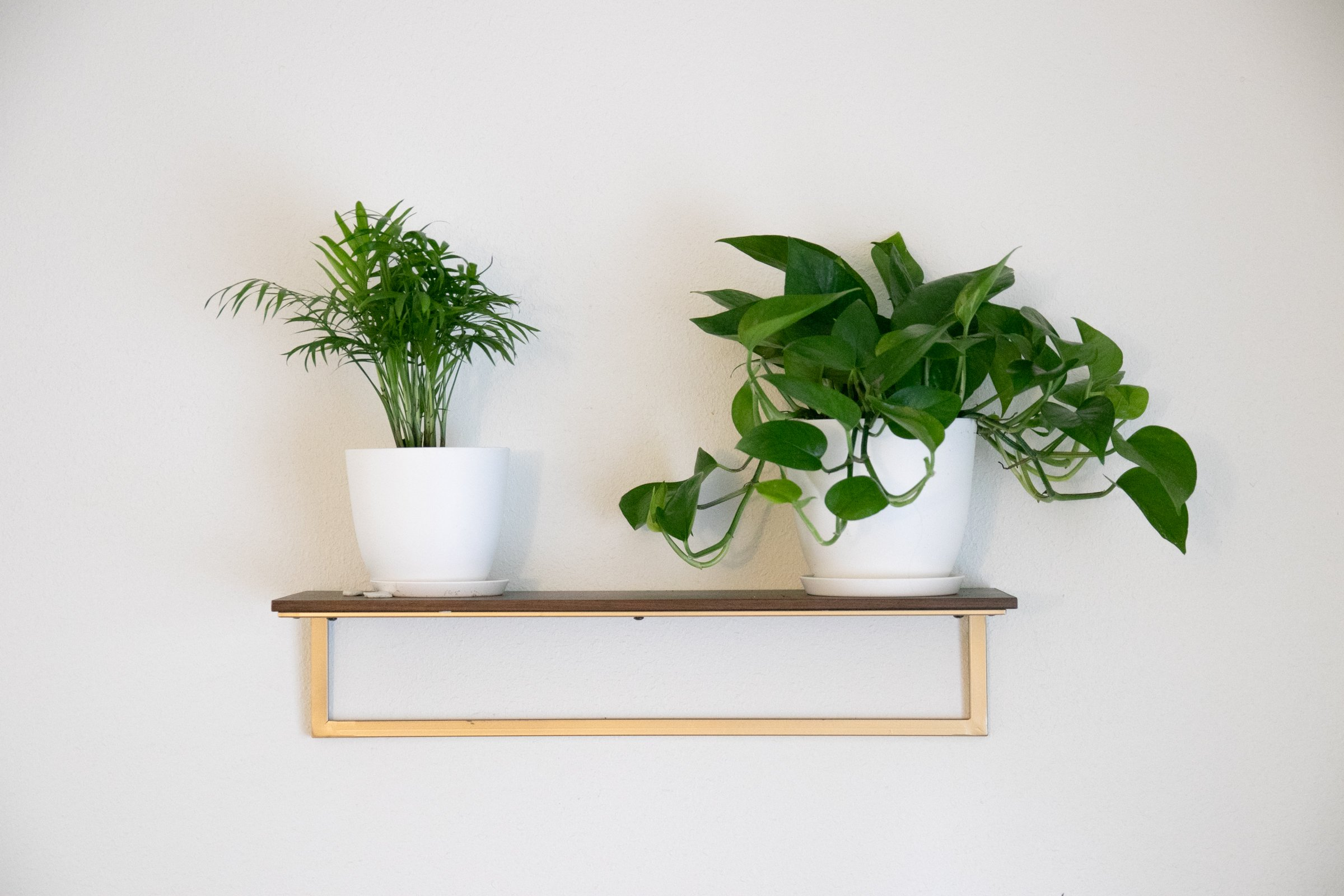 Two Potted Plants On Shelf