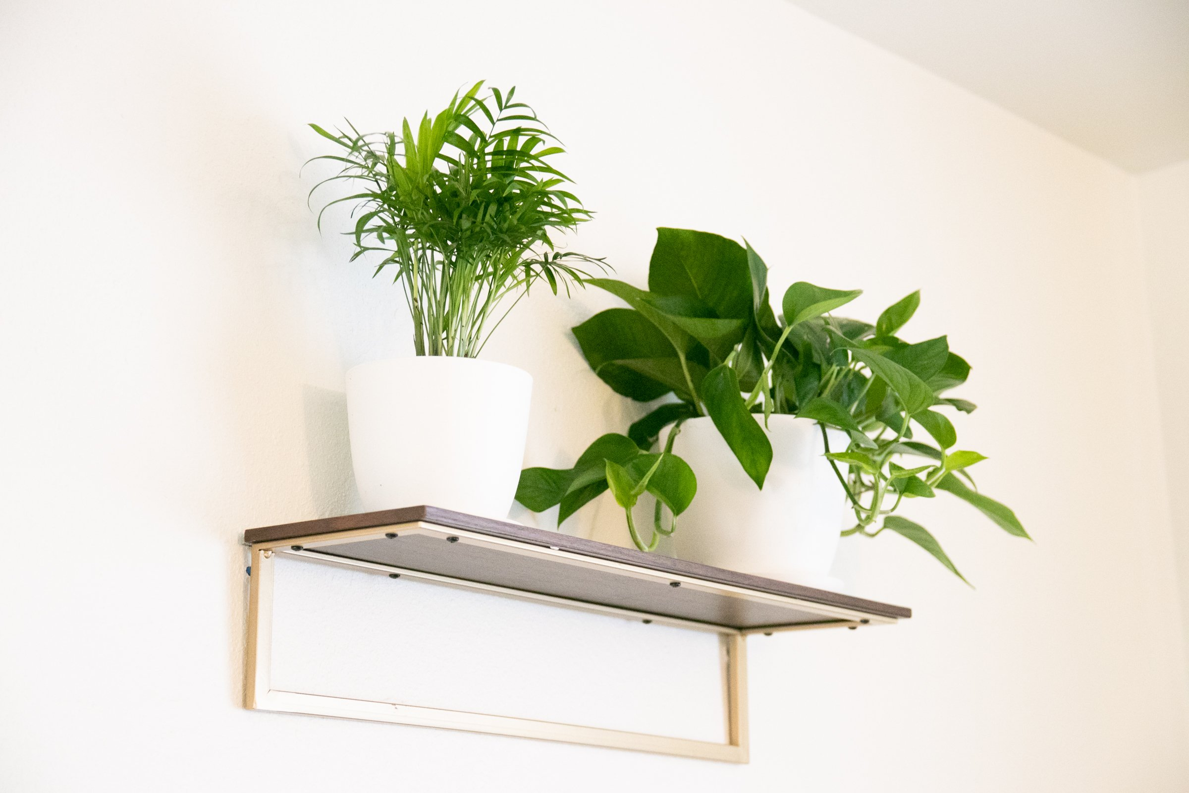 Plants In White Pots On Wall Mounted Shelf