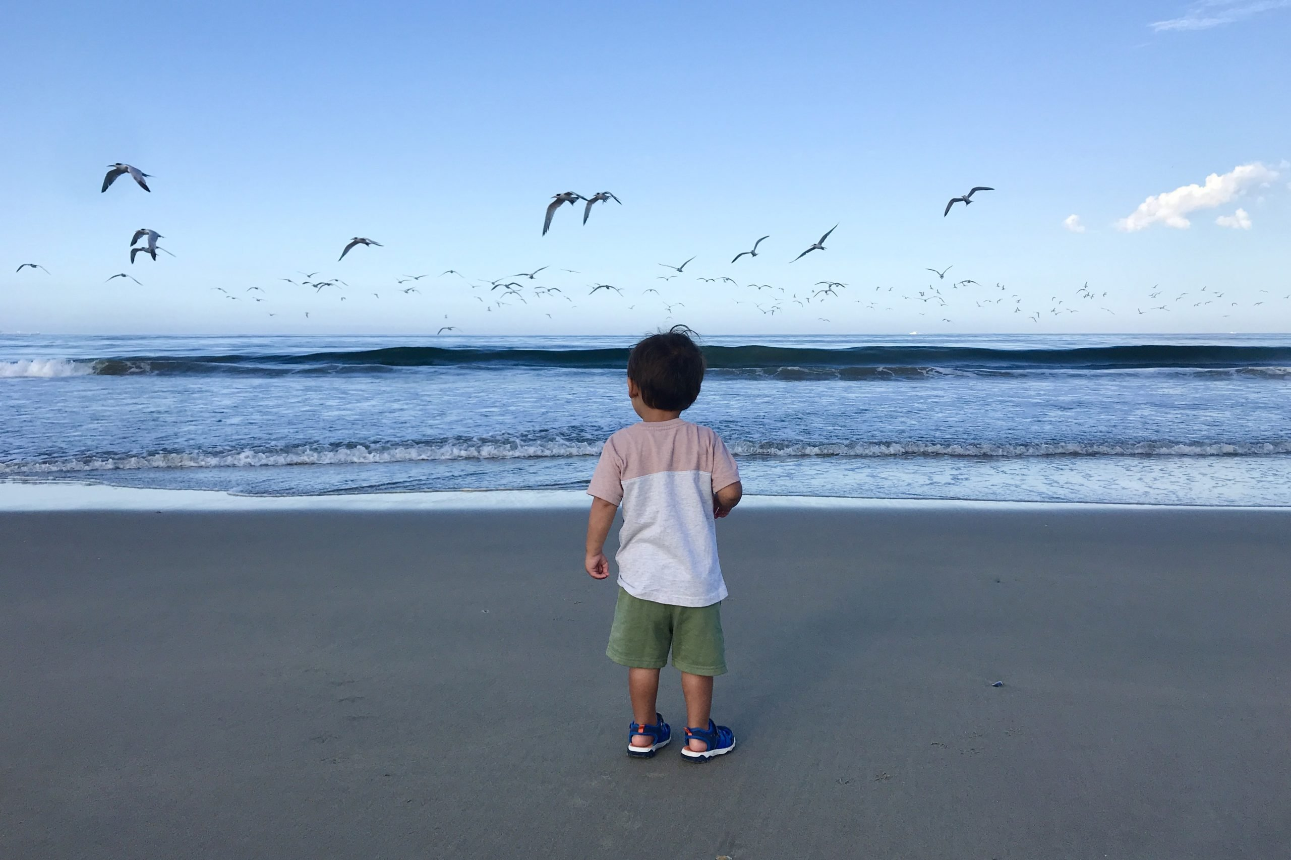 Small Child Watching Seagulls Flying Above Water