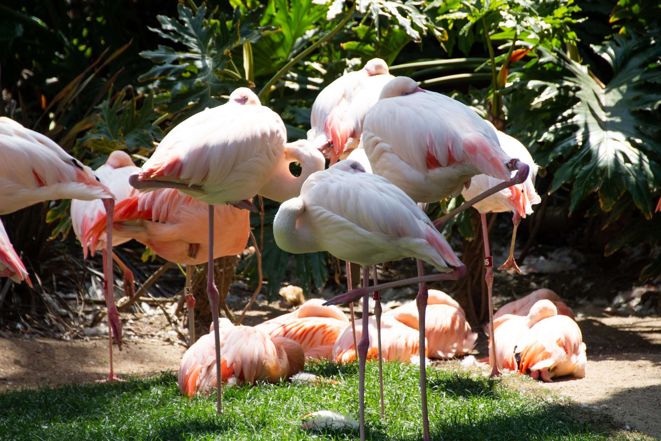 Group Of Flamingos On Grass Near Trees And Plants