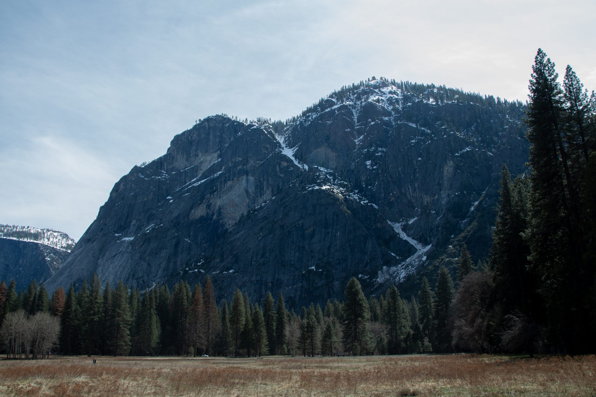 Large Ice Capped Mountains Behind Coniferous Forest