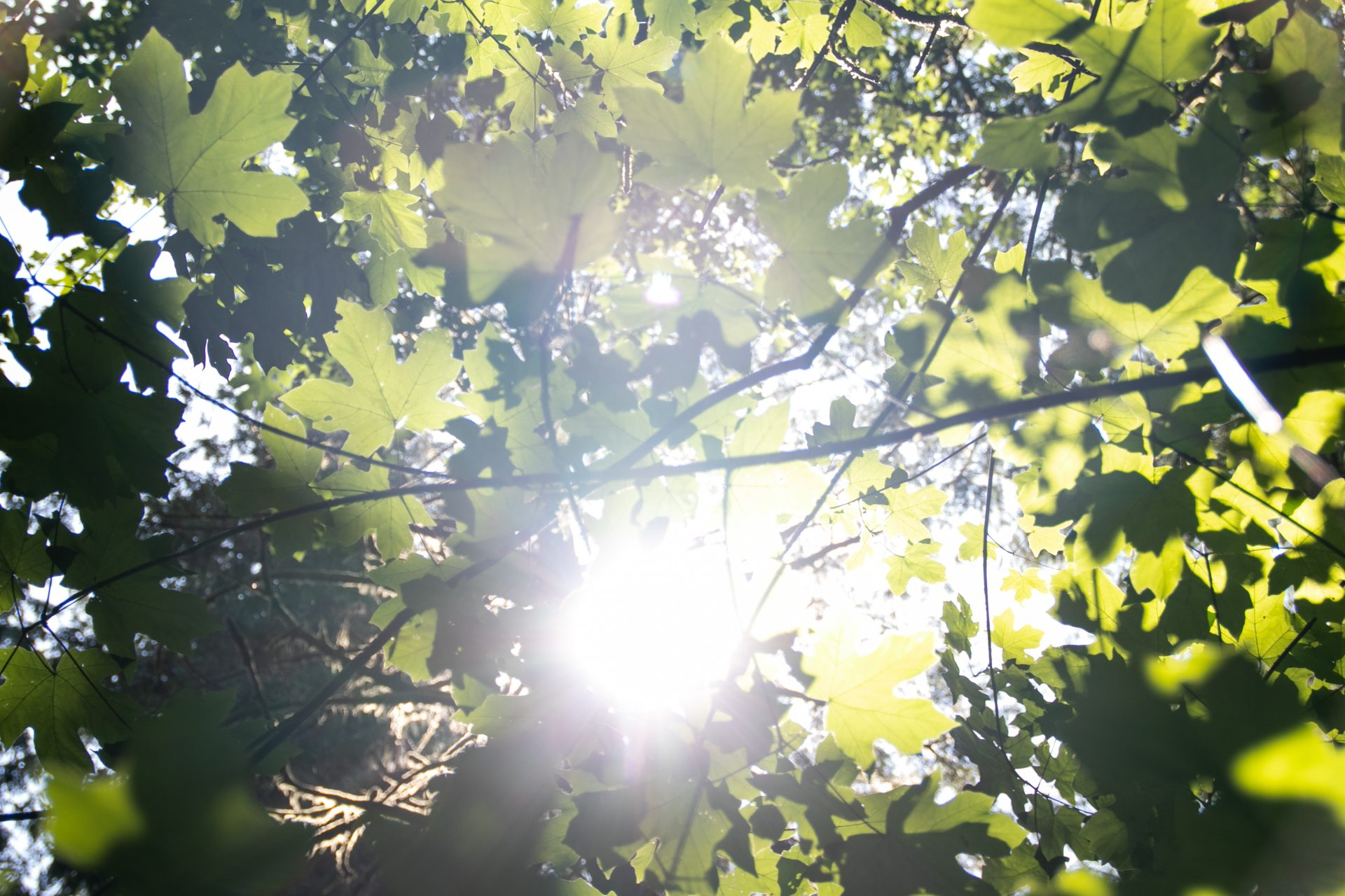 Bright Sunlight Through Tree Leaves