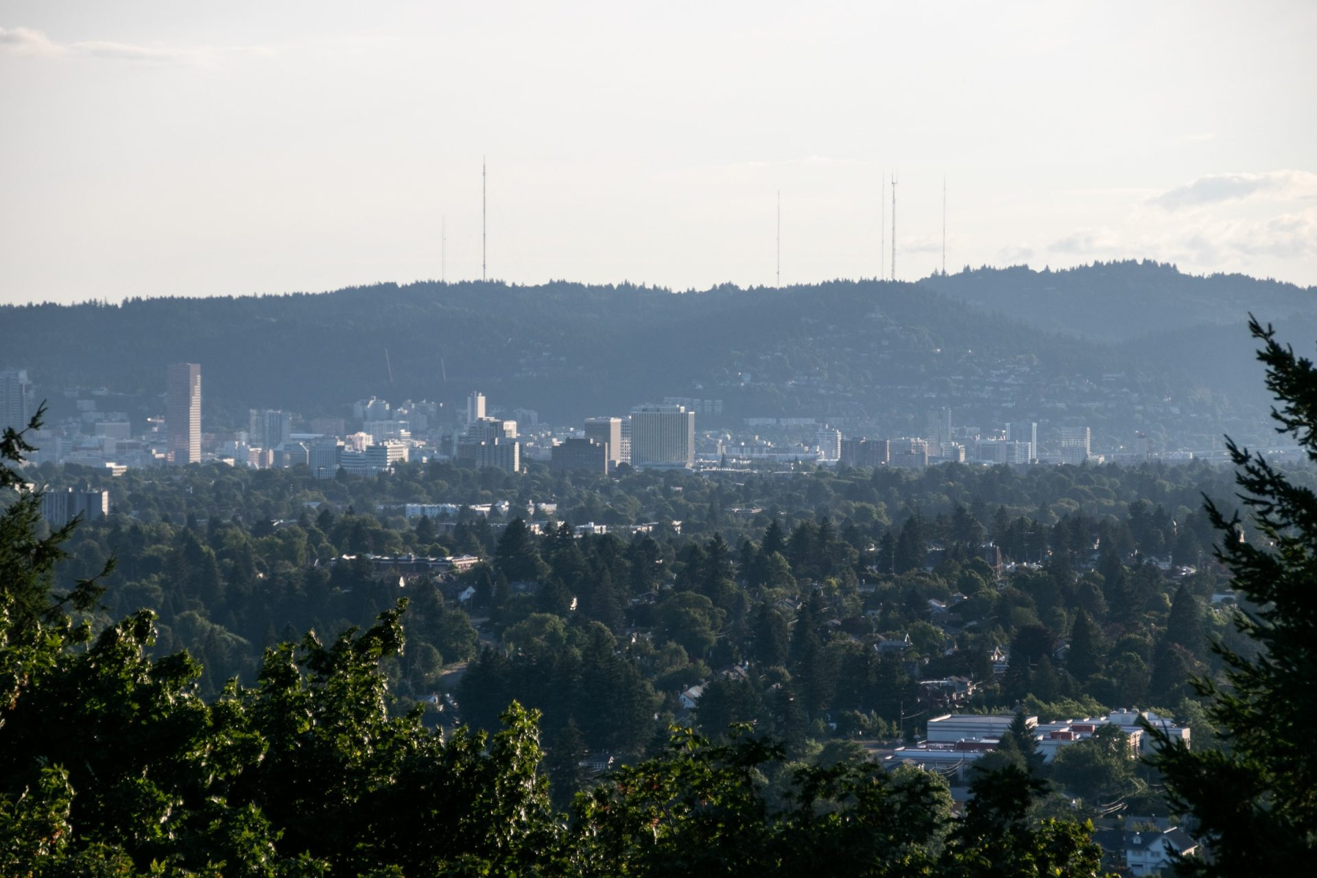 Distant Cityscape Amid Forested Areas