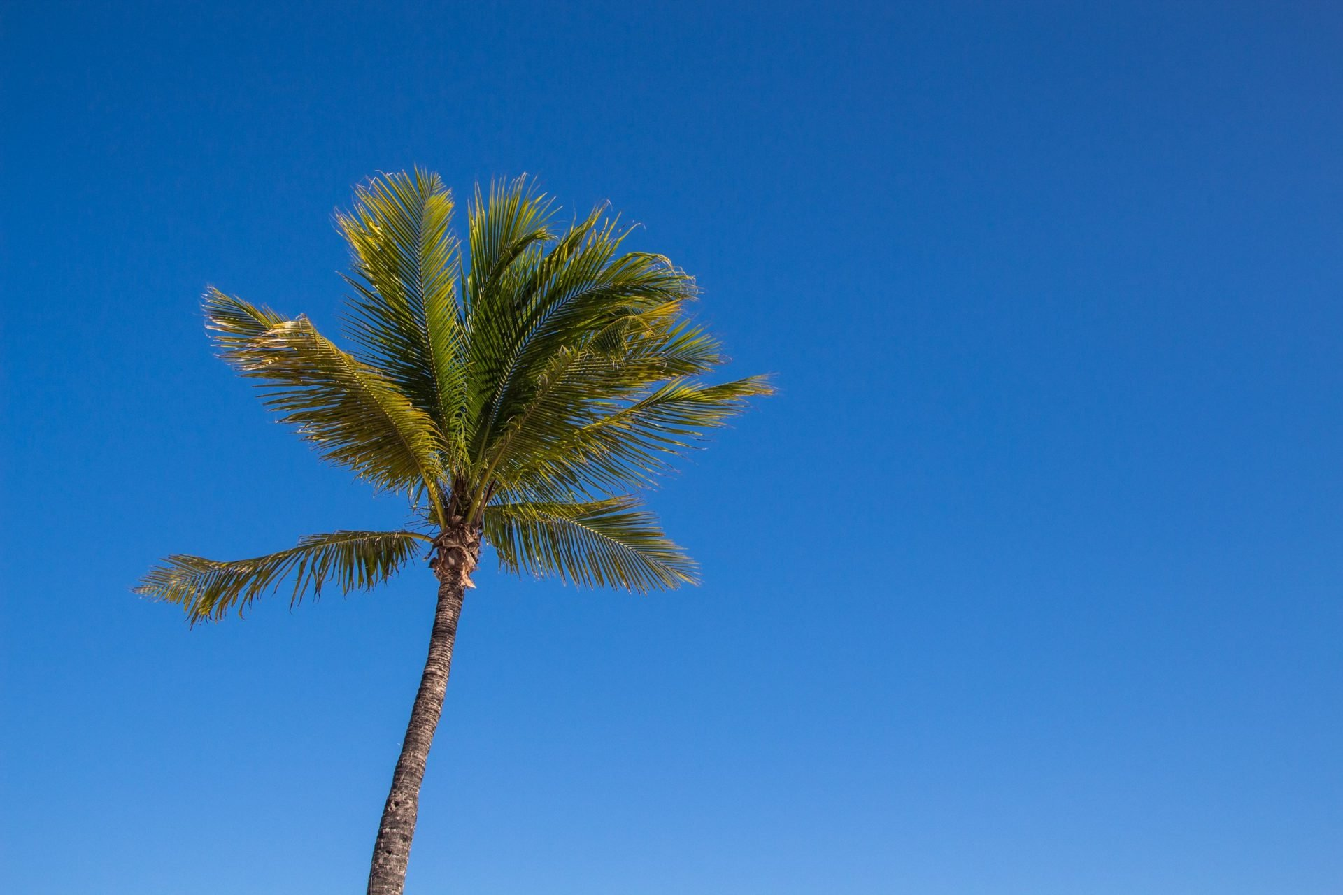 Lone Palm Tree Against Clear Sky