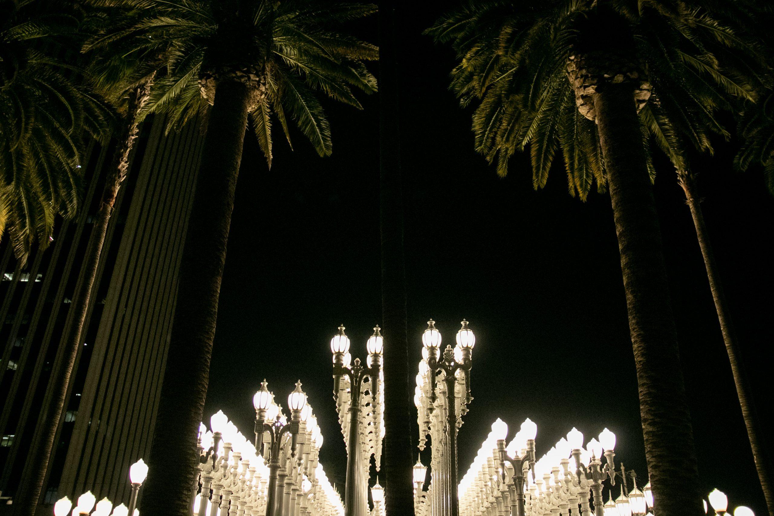 Palm Trees Near Urban Light Art Installation At Night
