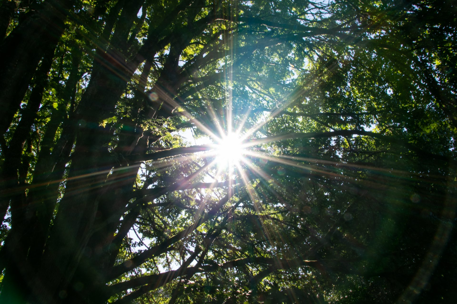 Sun Rays Through Intertwined Tree Branches