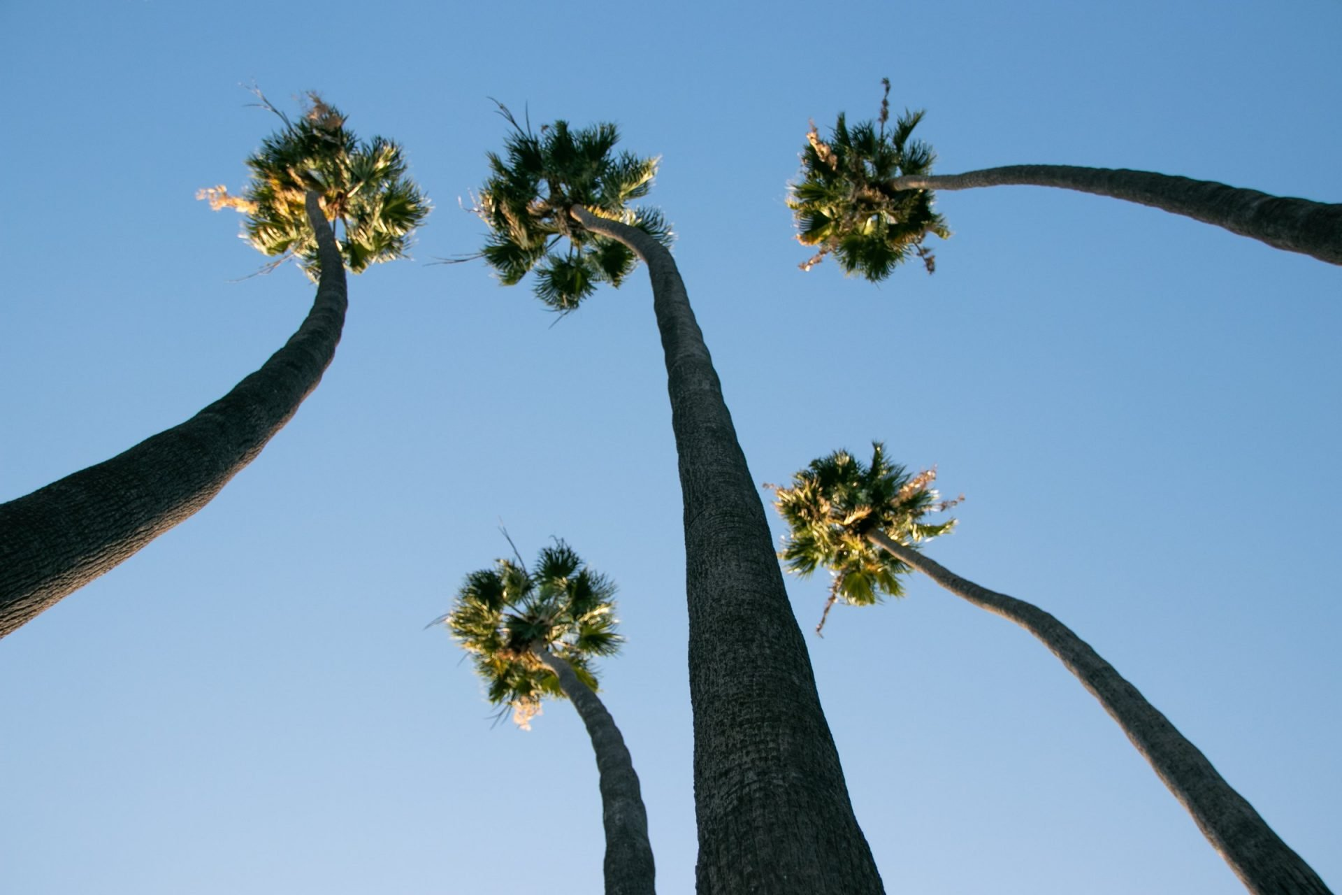 Five Tall Palm Trees Against Sky