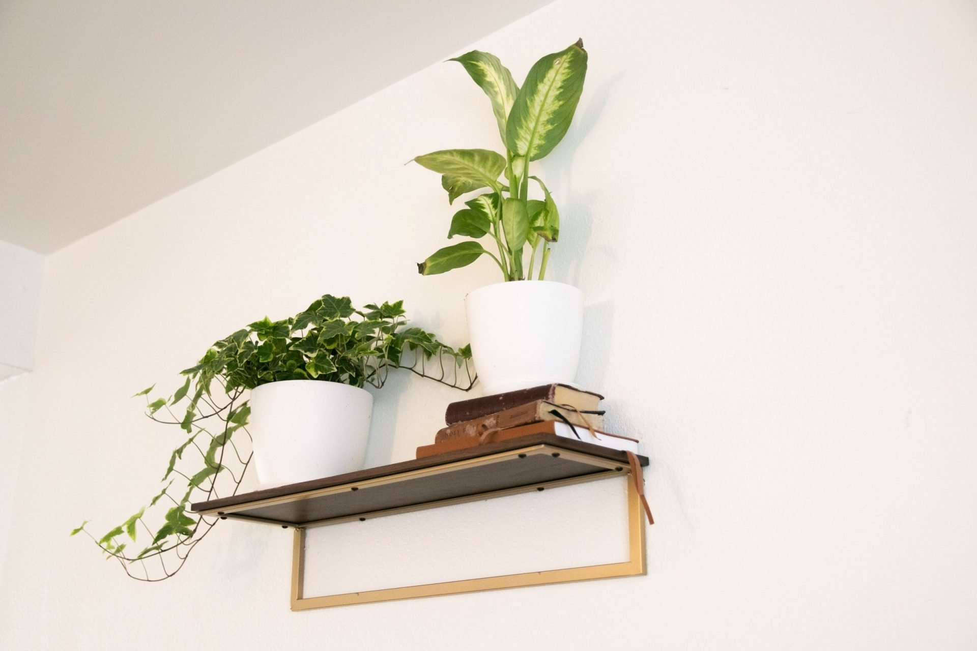 Potted Plants And Books On Wall Shelf