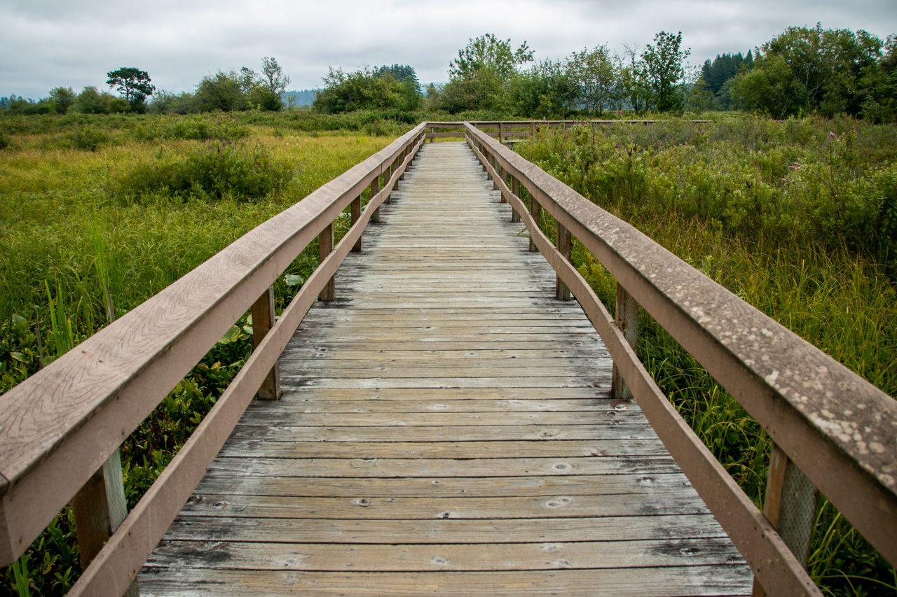 Railed Wooden Boardwalk In Nature