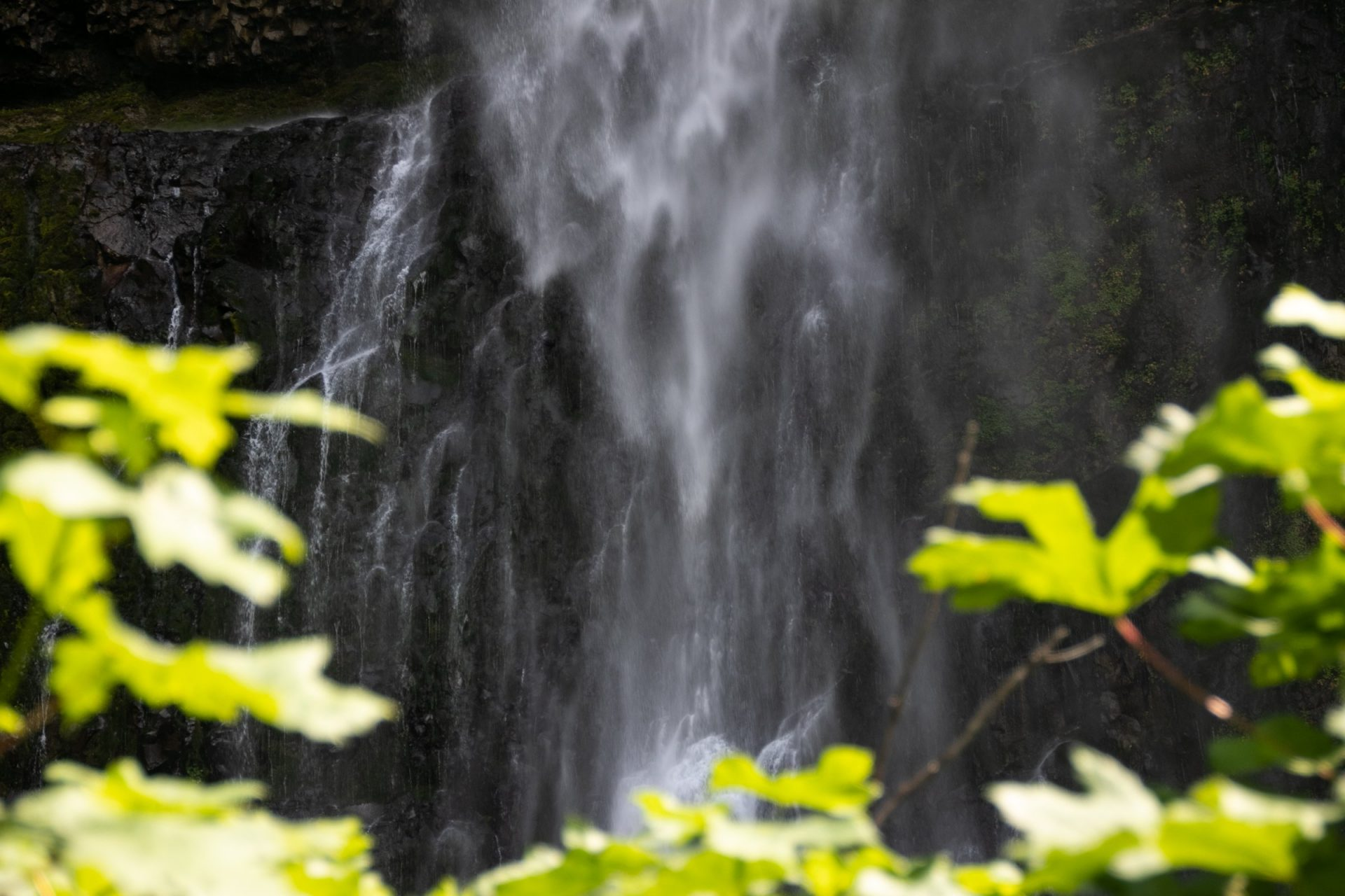 Spray Of Waterfall Cascade Behind Leaves