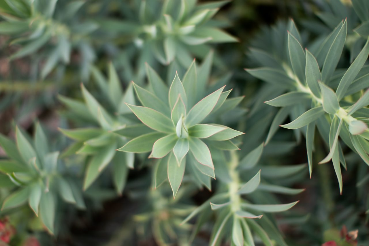 Close Up Of Leaves Of Plant