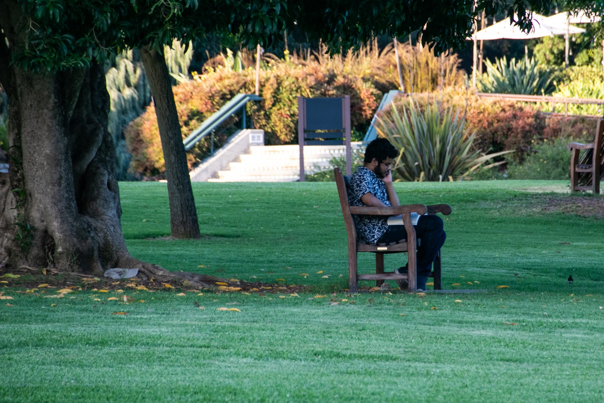Man Seated On Bench Under Tree