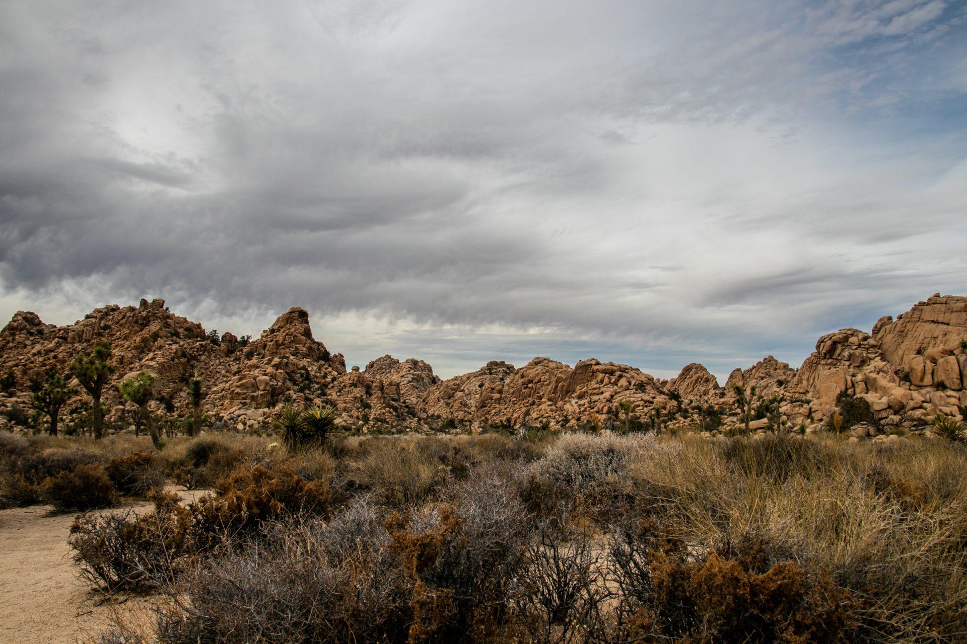 Rocky Hills Behind Desert Bushes